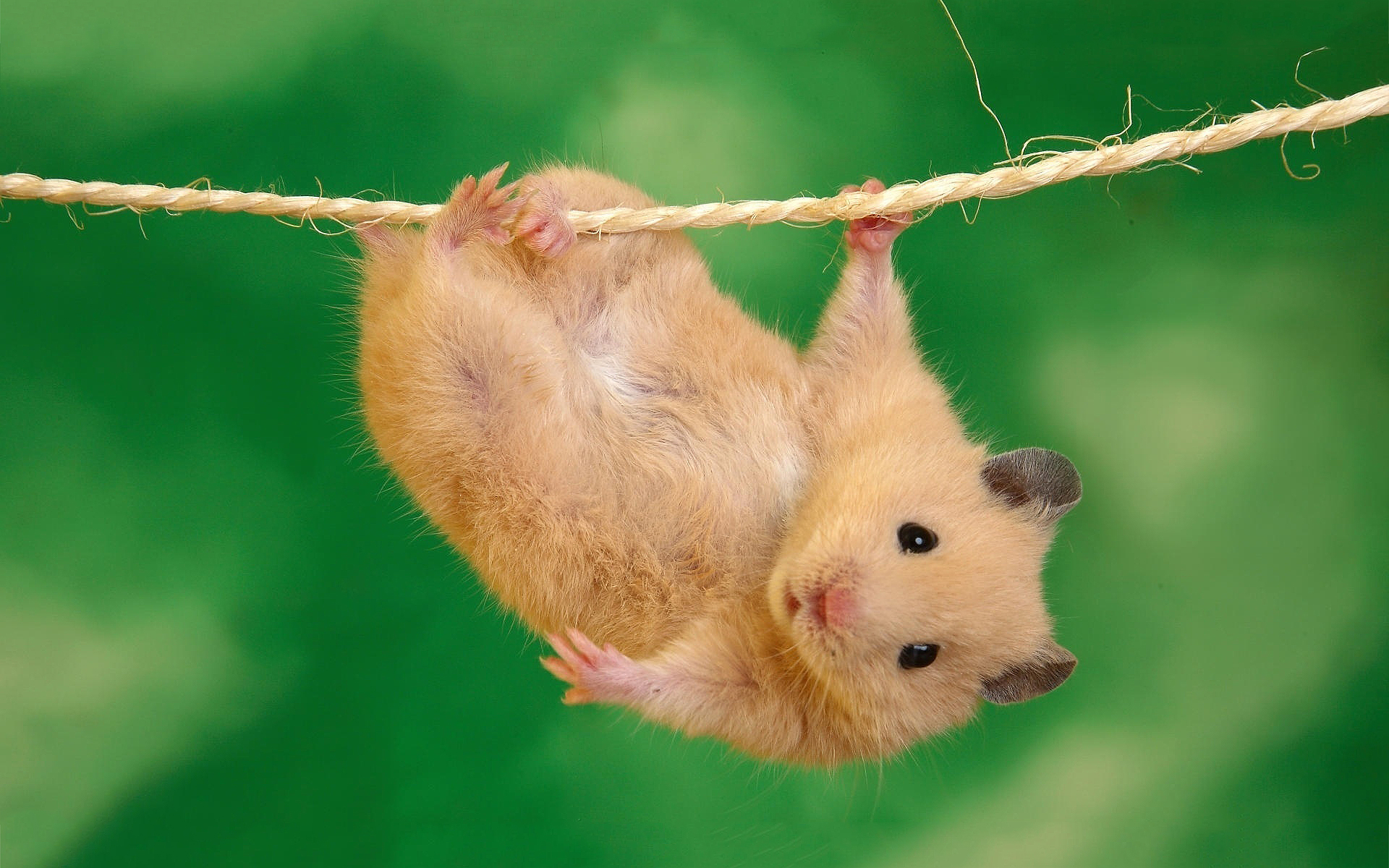 Hamster hang out