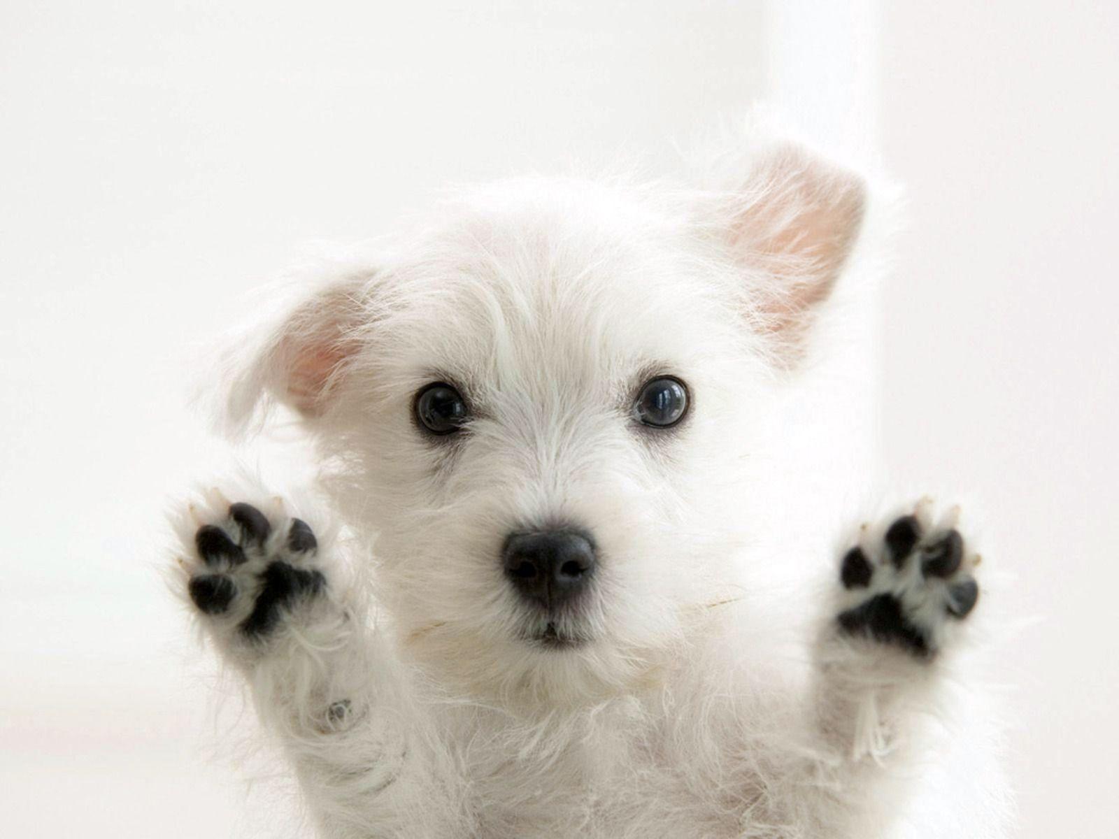 desktop happy friday dog pics