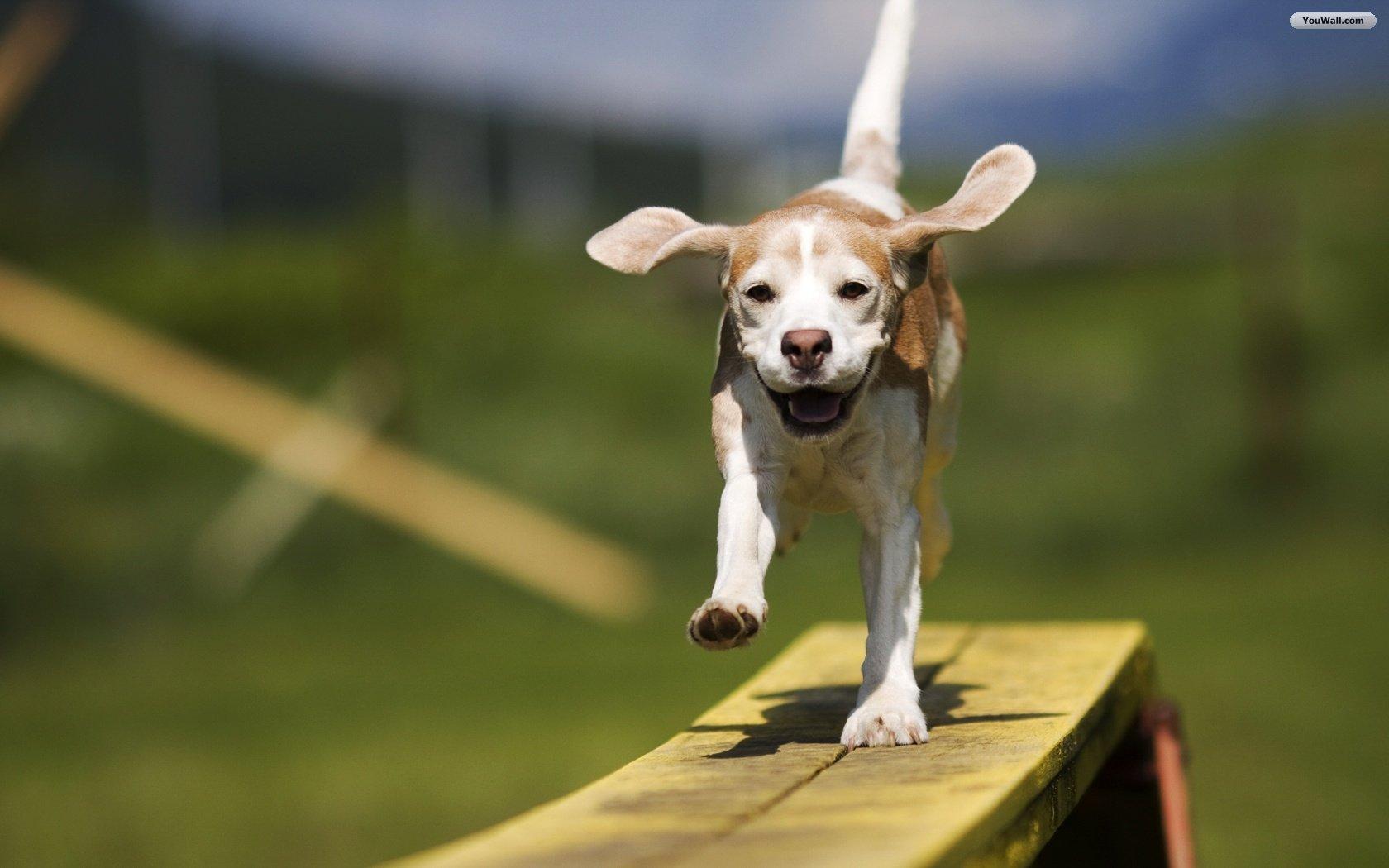 http://hqtiger.mobi/wp-content/uploads/happy-dog-wallpaper-7.jpg
