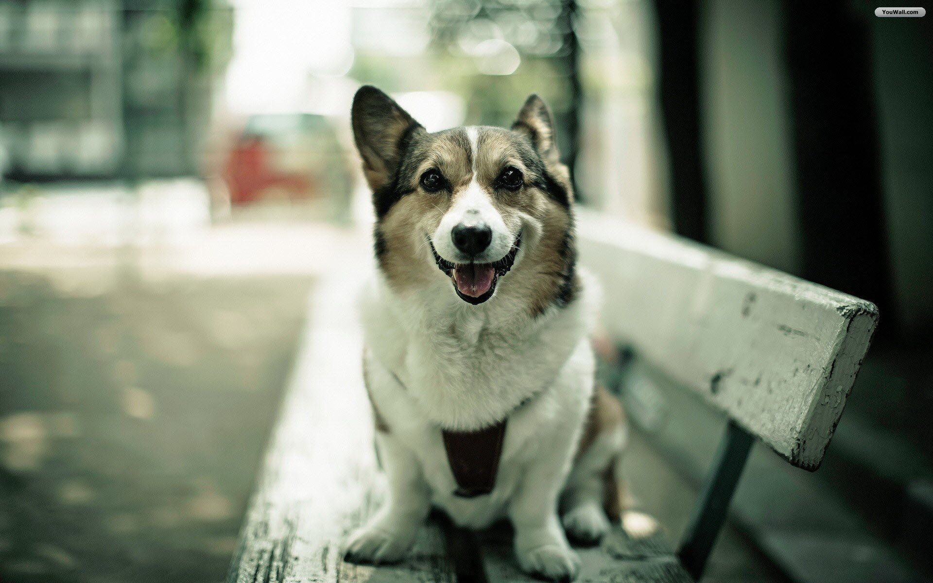 Happy Dog Wallpapers