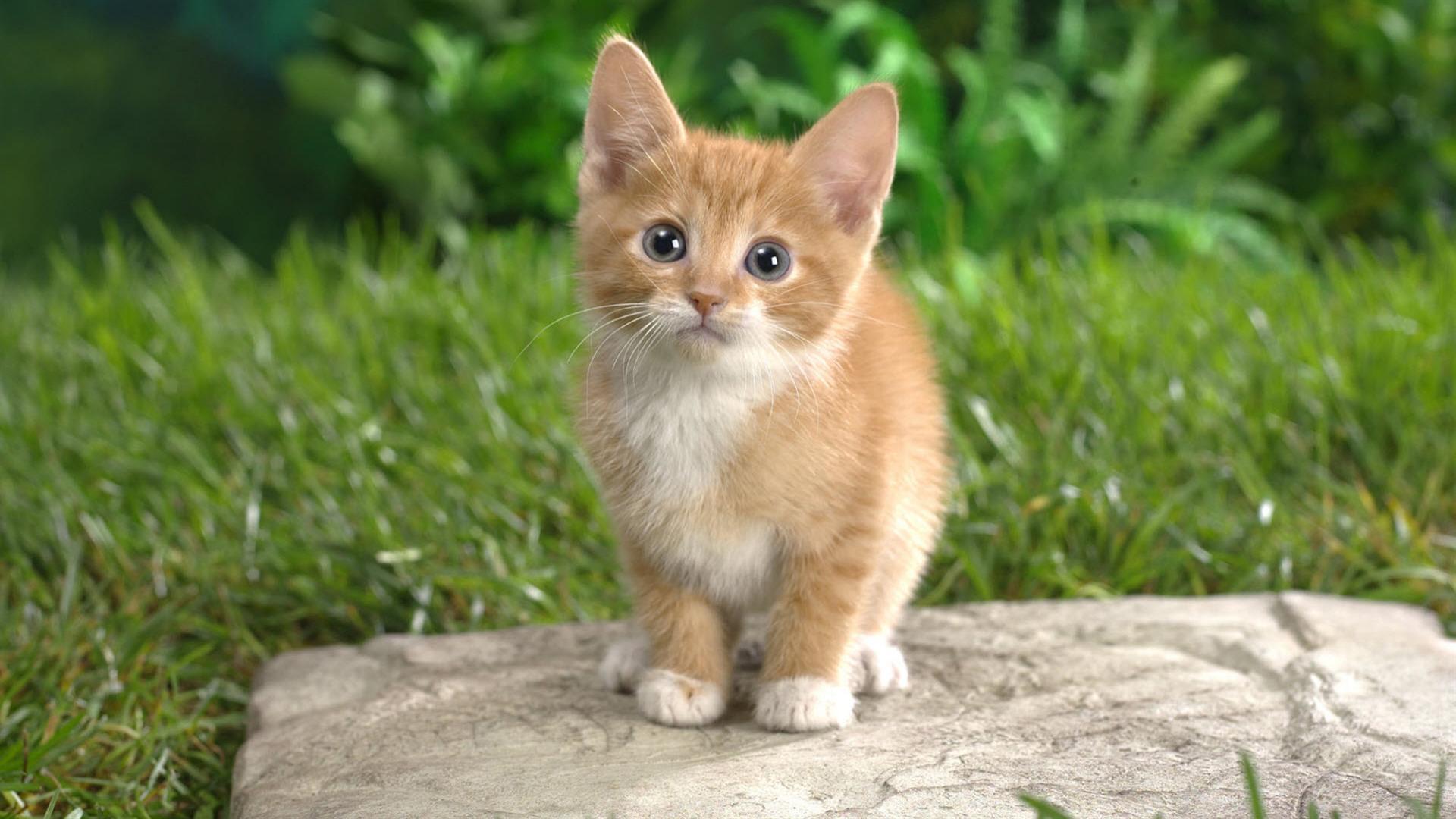 happy kittens #19
