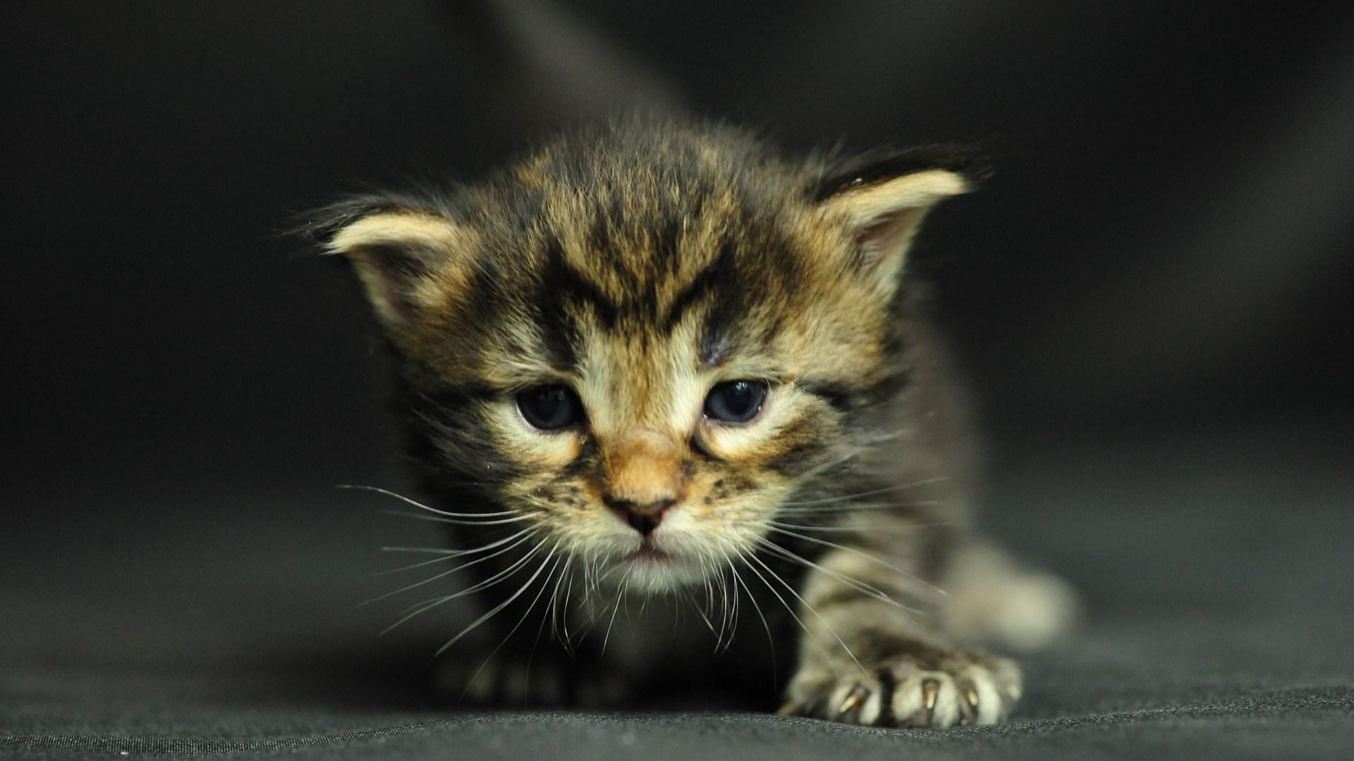 happy kittens #21