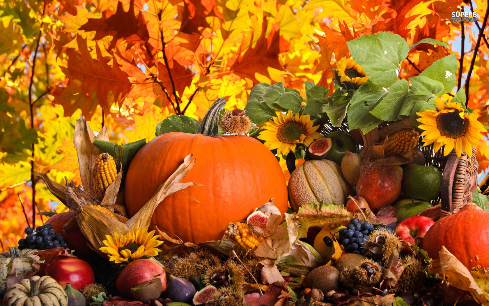 Autumn harvest wallpaper 1680x1050
