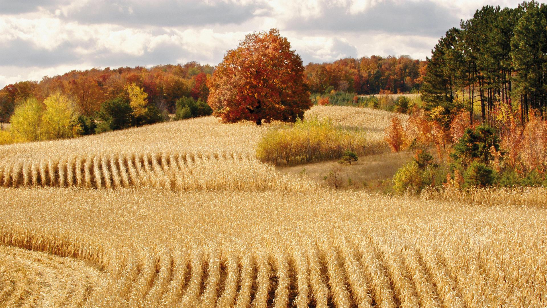 Beautiful Harvest Wallpaper