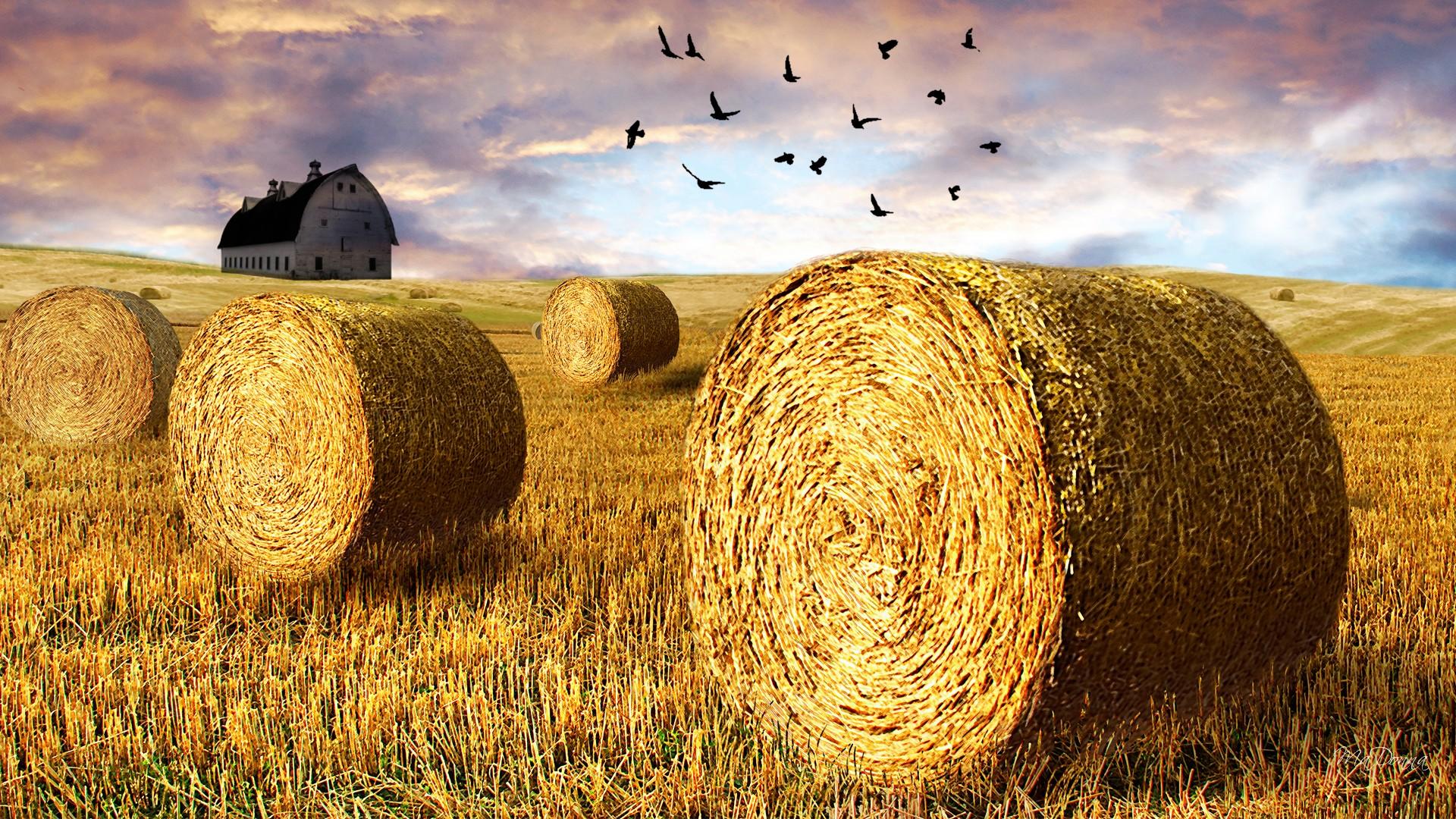 Hay Wallpaper 32979 1680x1050 px