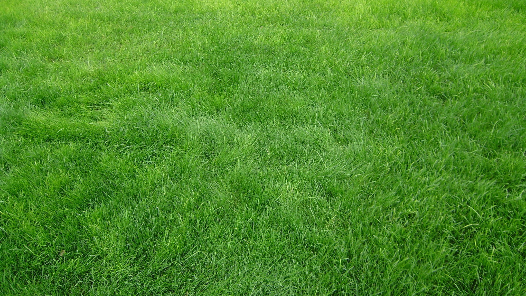 HD Grass Background