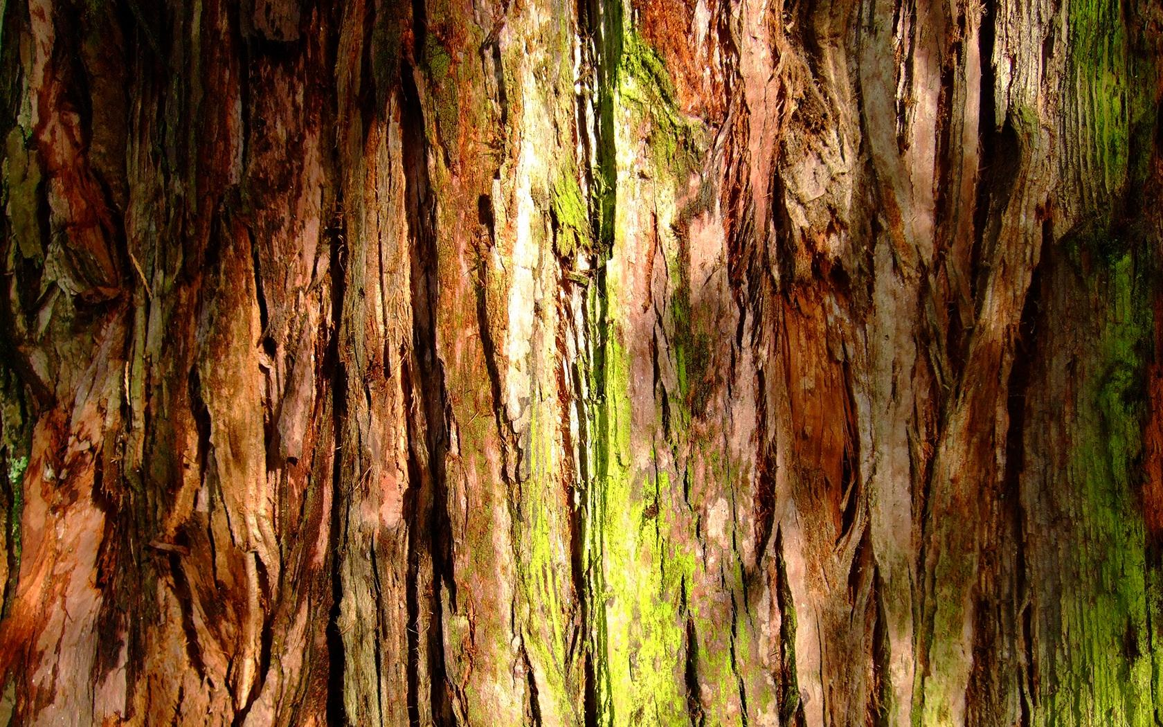 Wallpaper Tags: mossy nature tree bark green plants moss photography forests