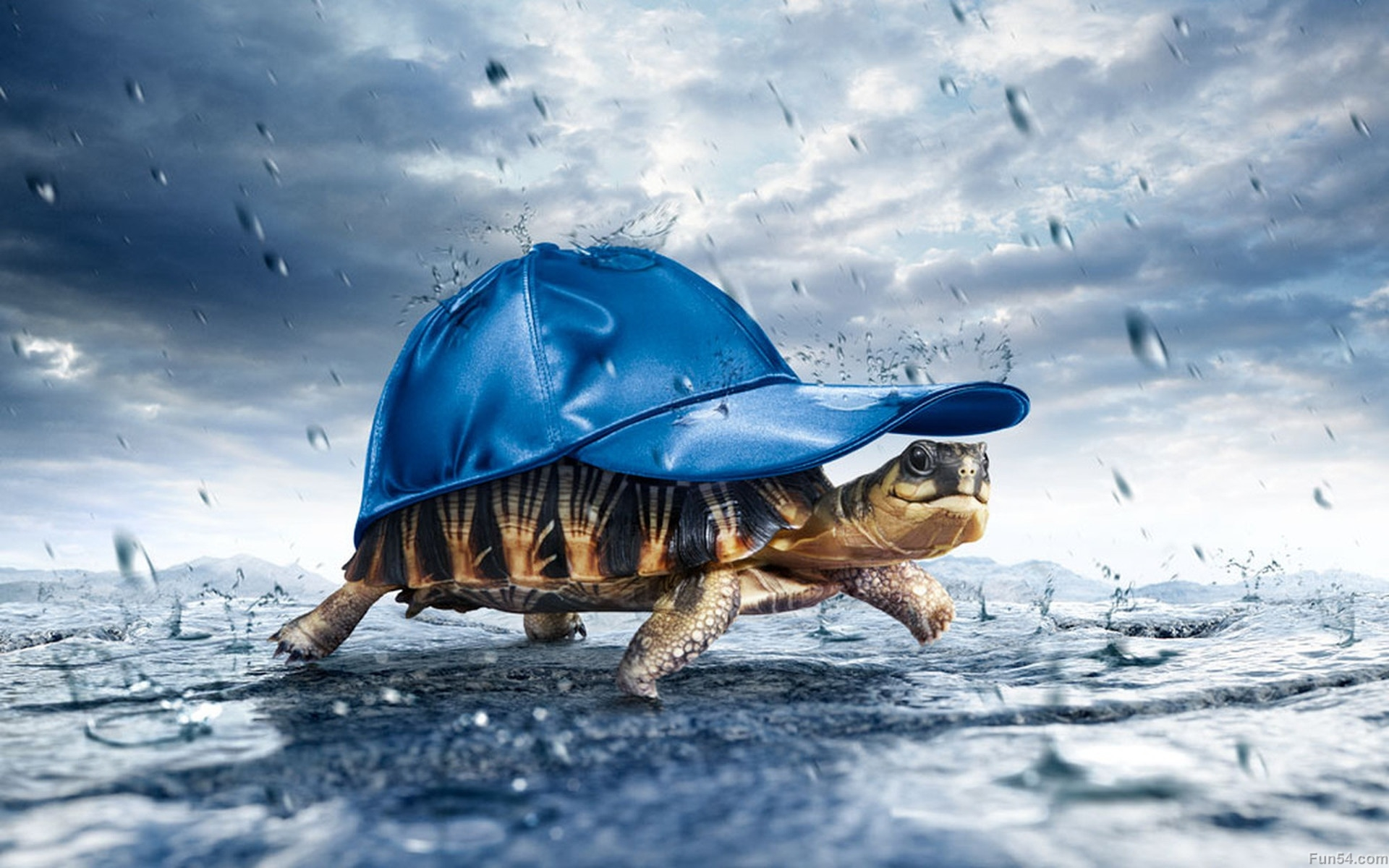 beautiful-multi-colours-tortoise-wearing-a-blue-cap-