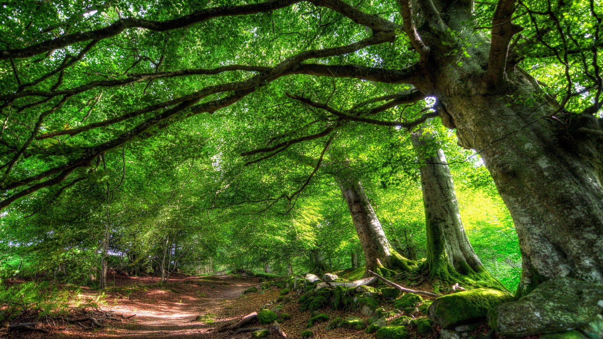 Path Under A Forest Canopy Hdr HD Desktop Background