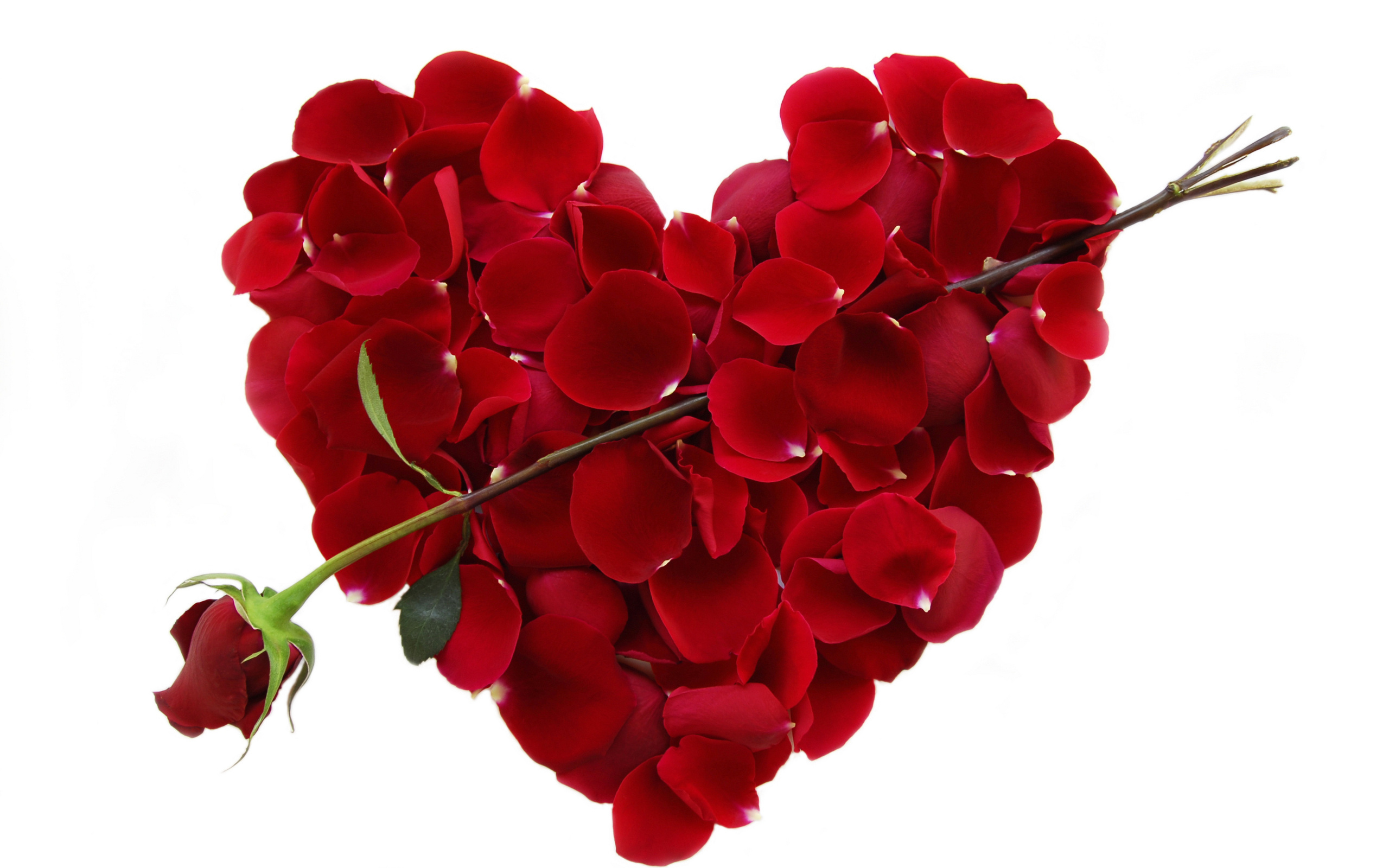 Heart flowers hd