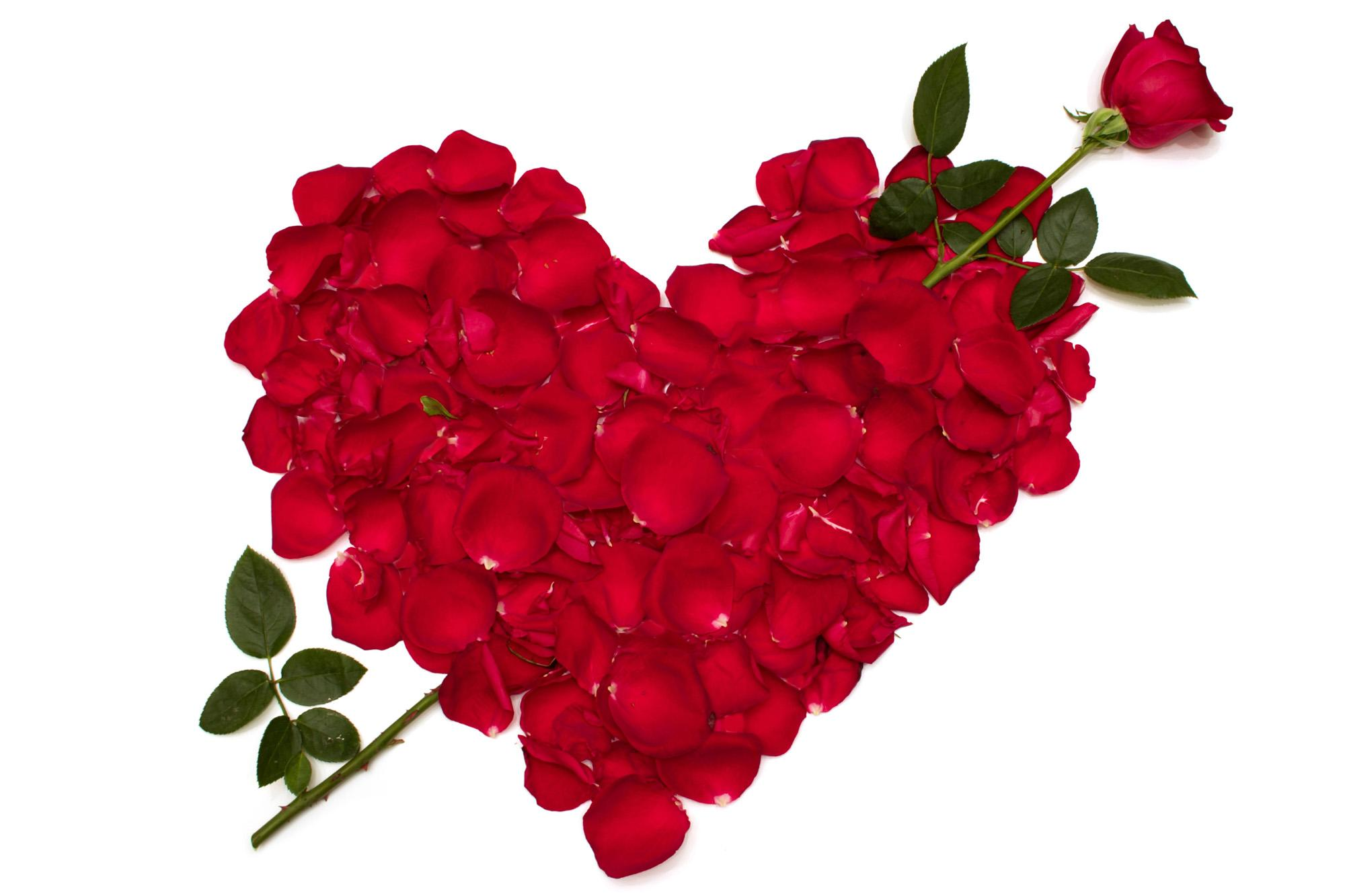 ... Love Roses Heart Red Petals Flowers Wallpaper 2000×1333