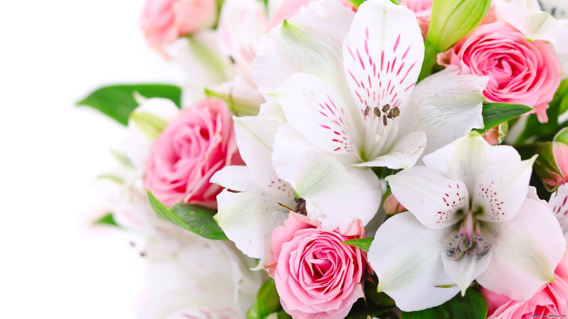 High Resolution Flowers Wallpaper
