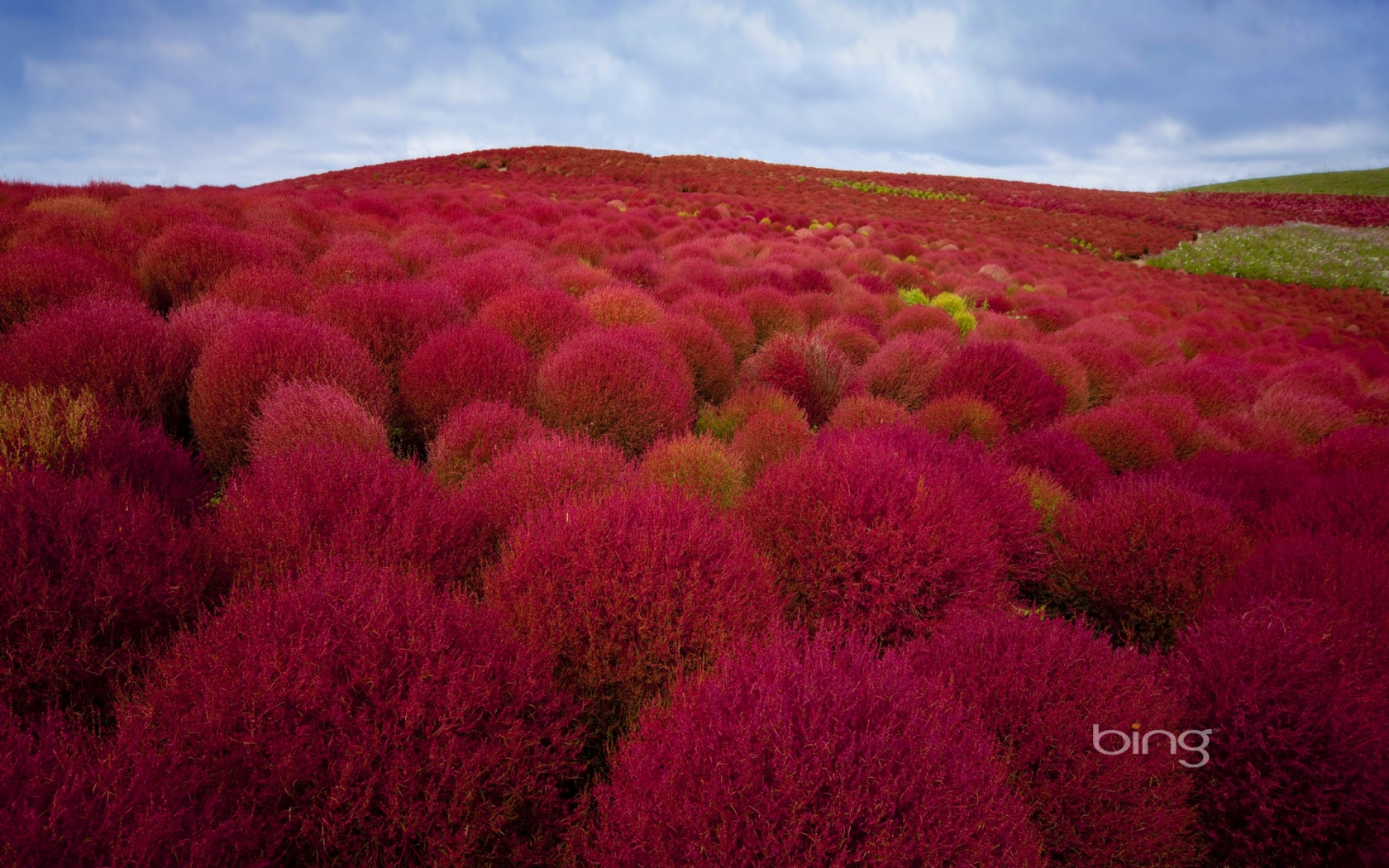 ... x 1200 Original Link. Download Hitachi Seaside Park ...