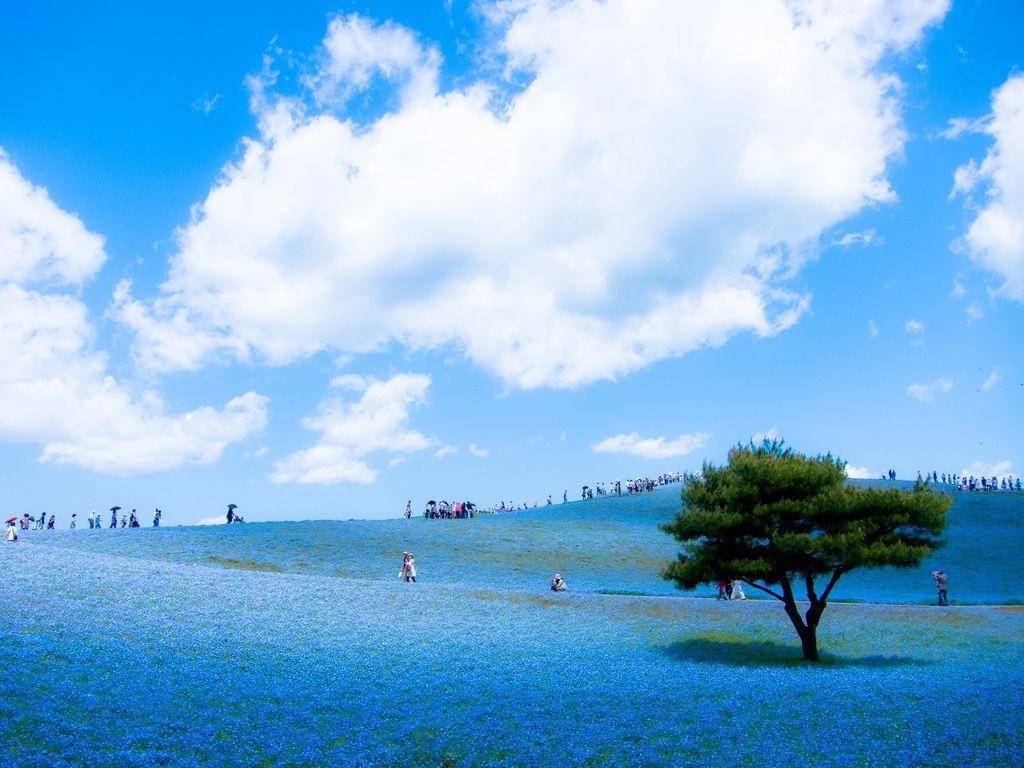 Hitachie Seaside Park