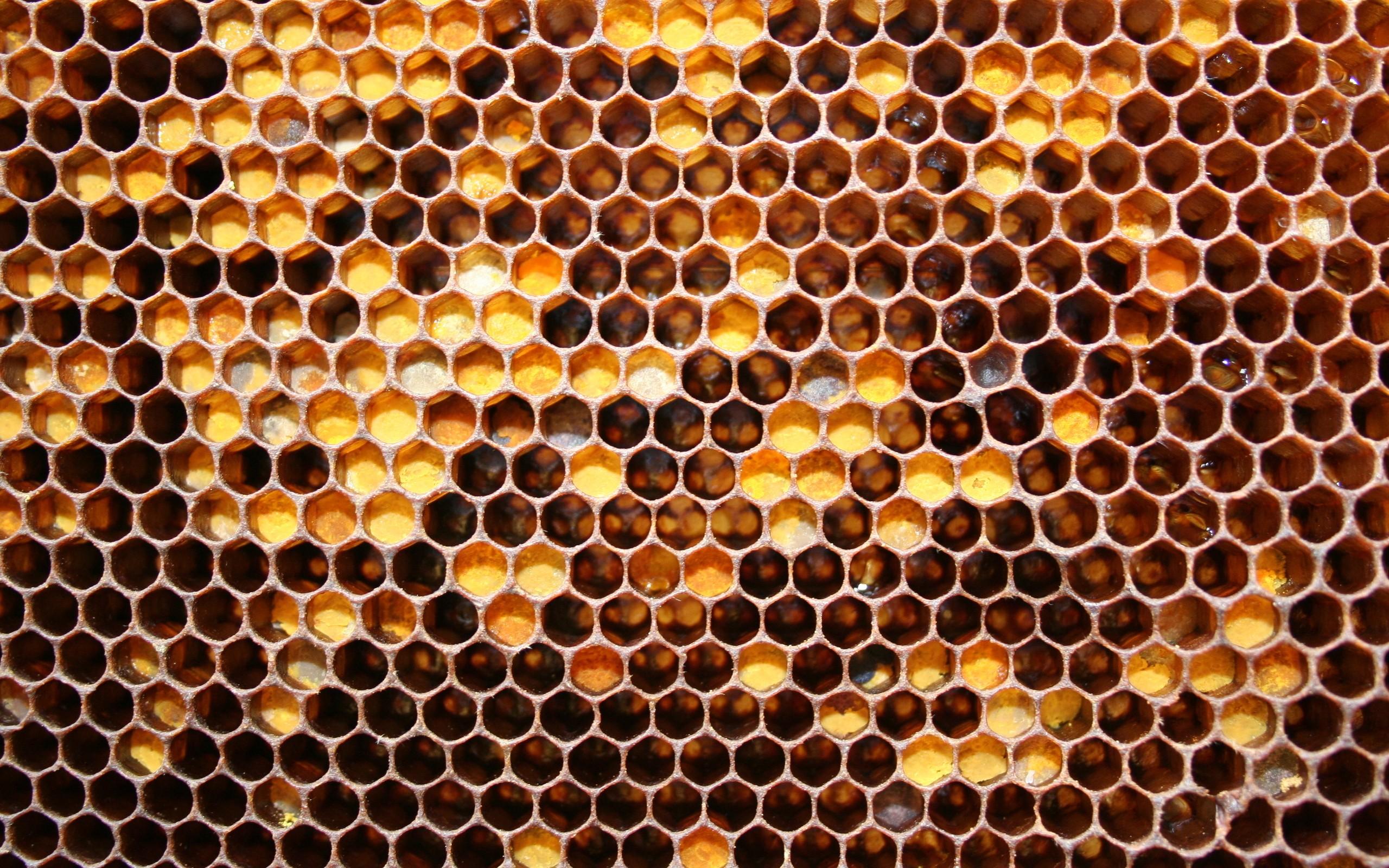 Honeycomb HD Wallpaper