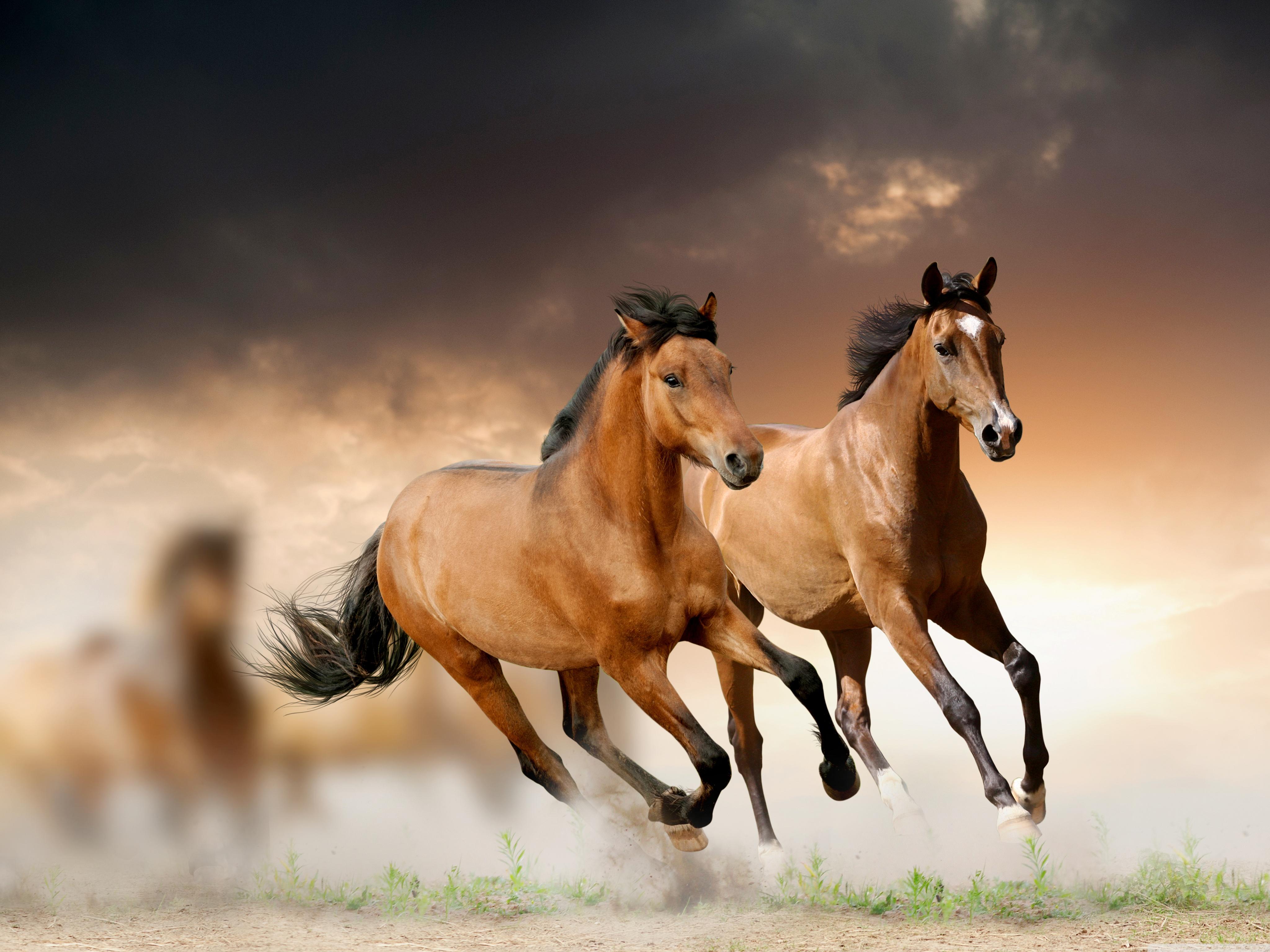 Horse Horse Horse Horse Horse Horse Horse Horse