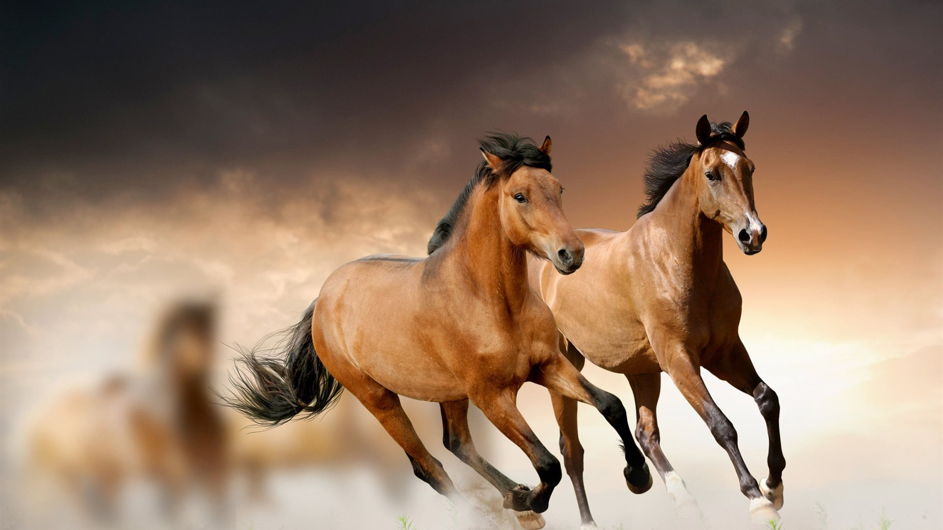 ... 1920 x 1080. 2014 horses background calendar in wallpaper collections ...