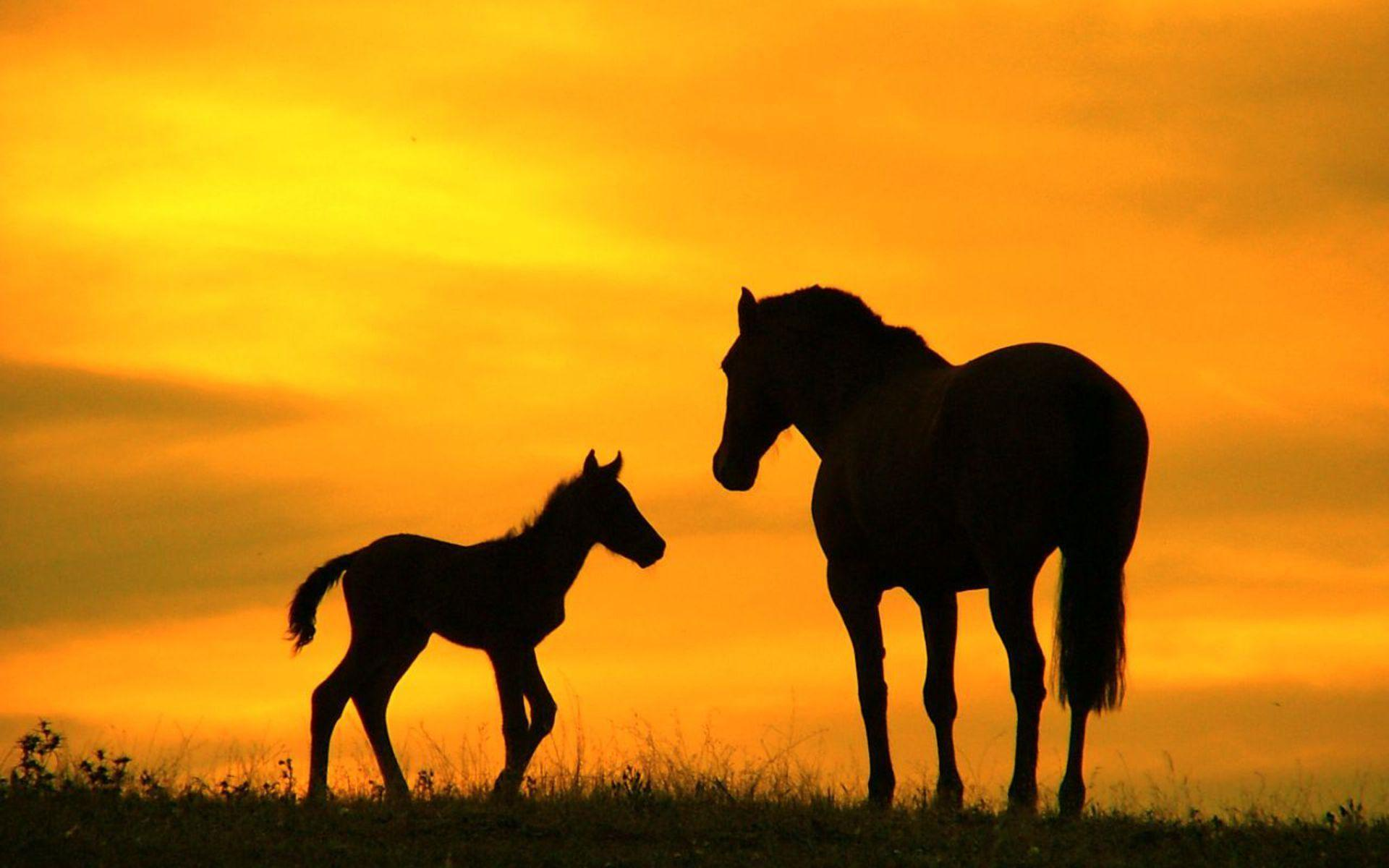 Horses pictures family horse ranch free wallpaper in free desktop backgrounds category: Horse-backgrounds.