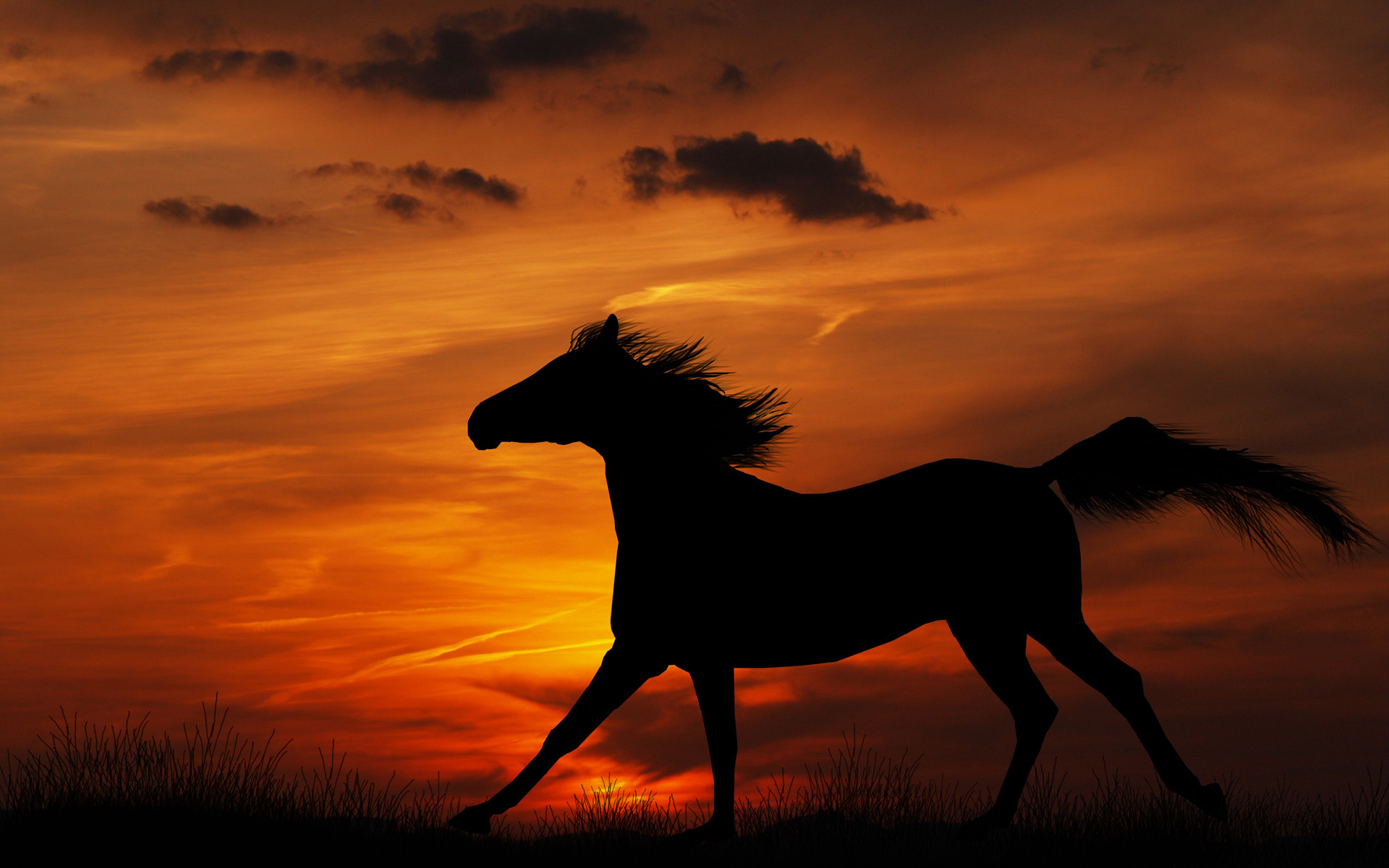 HD Wallpaper | Background ID:404290. 1920x1200 Animal Horse