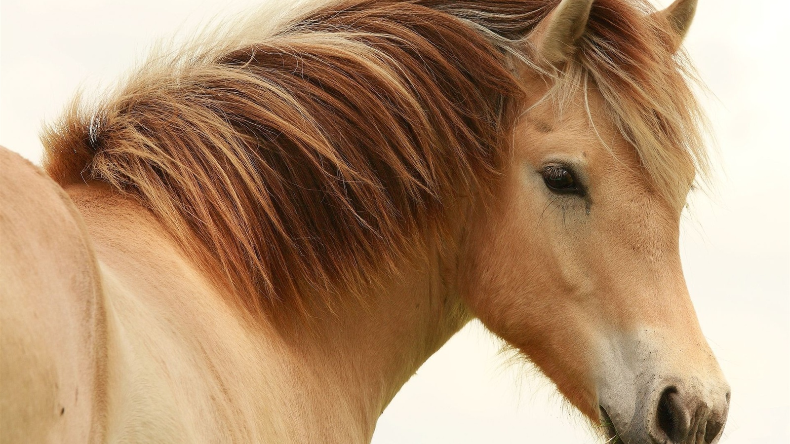 Horse Close Up Wallpaper HD
