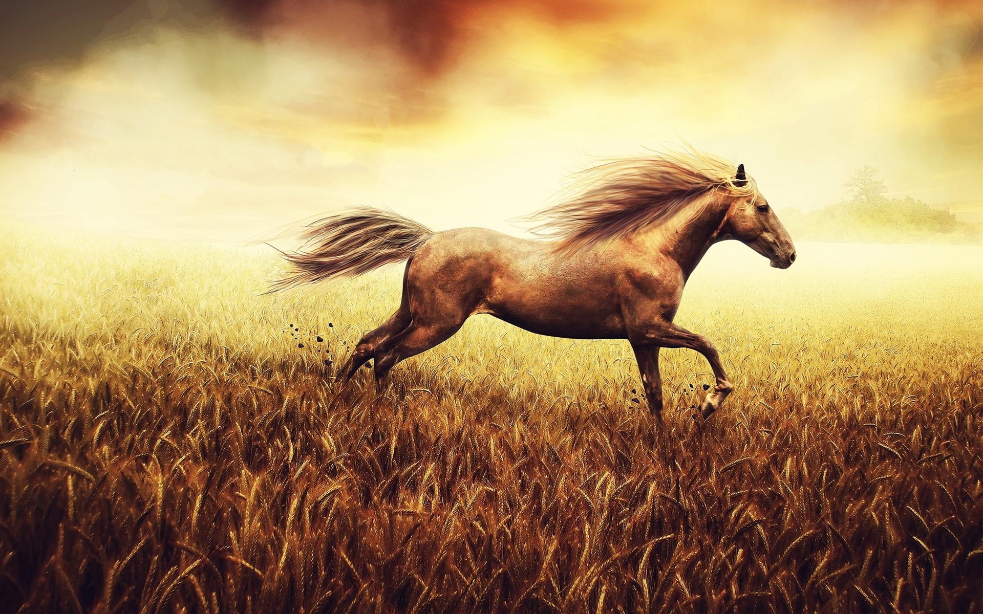Horse cornfield
