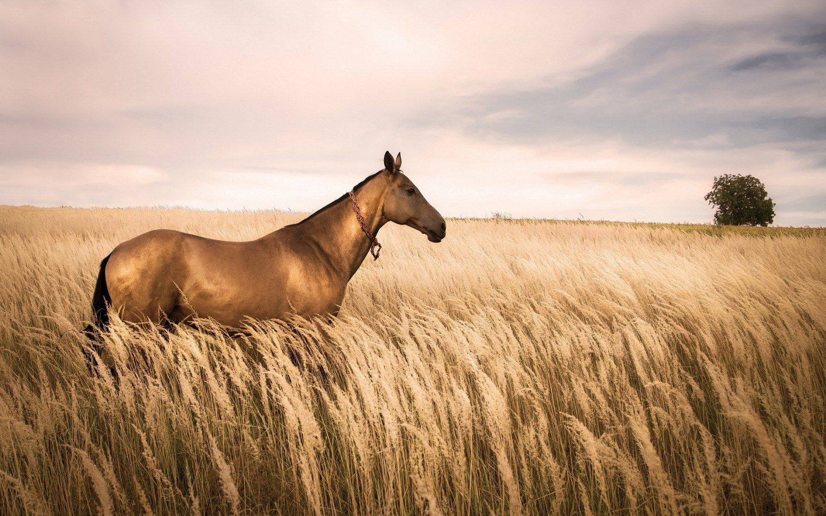 Horse Field Nature