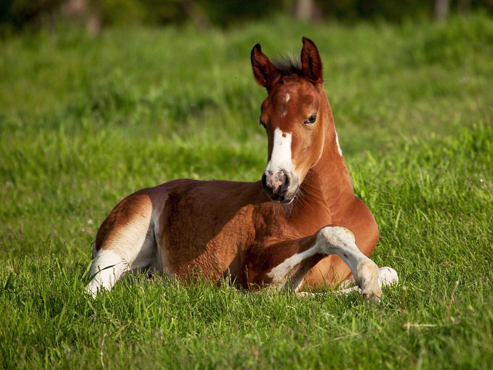 Baby Animals horse foal