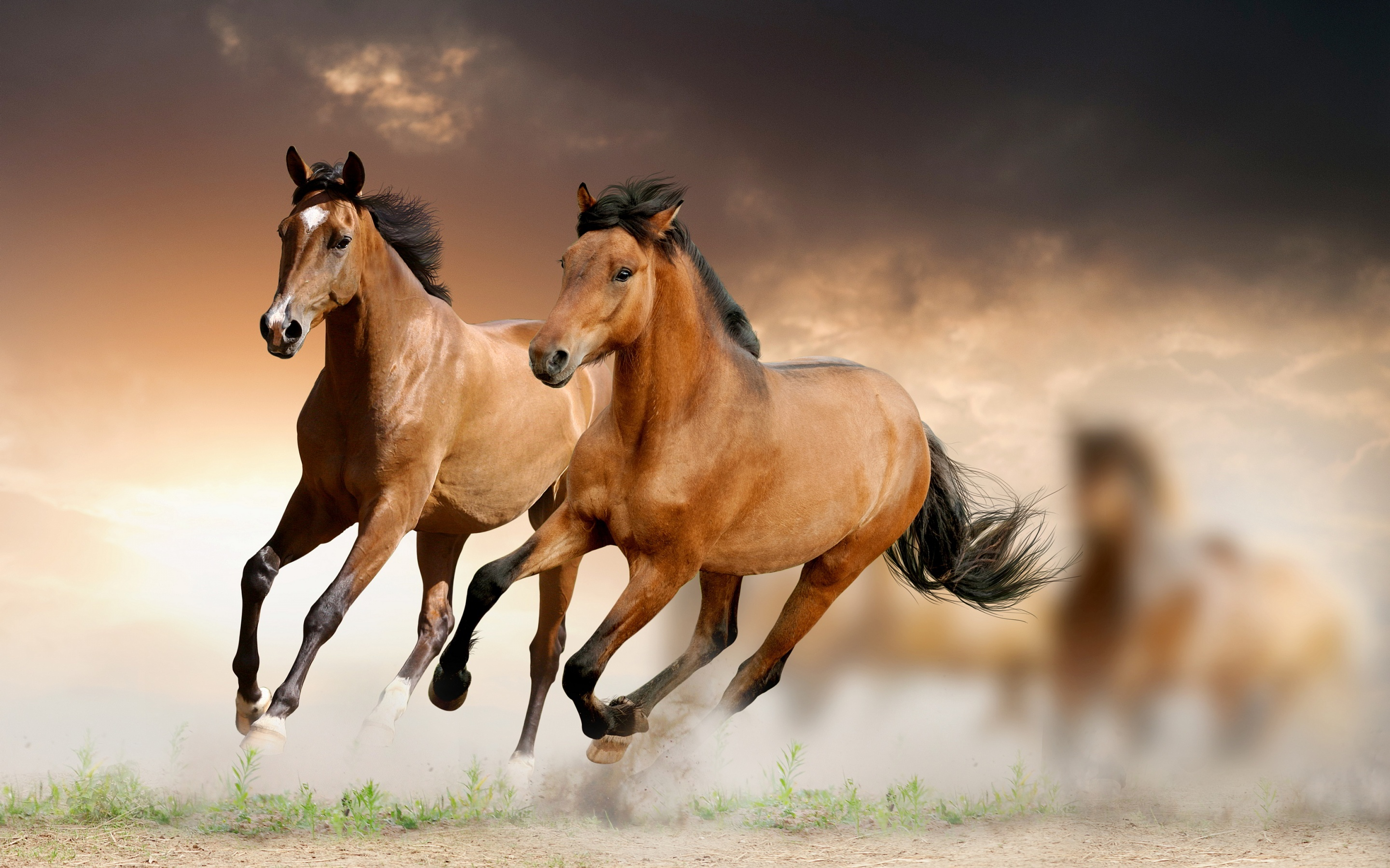 15 Beautiful HD Horse Wallpapers