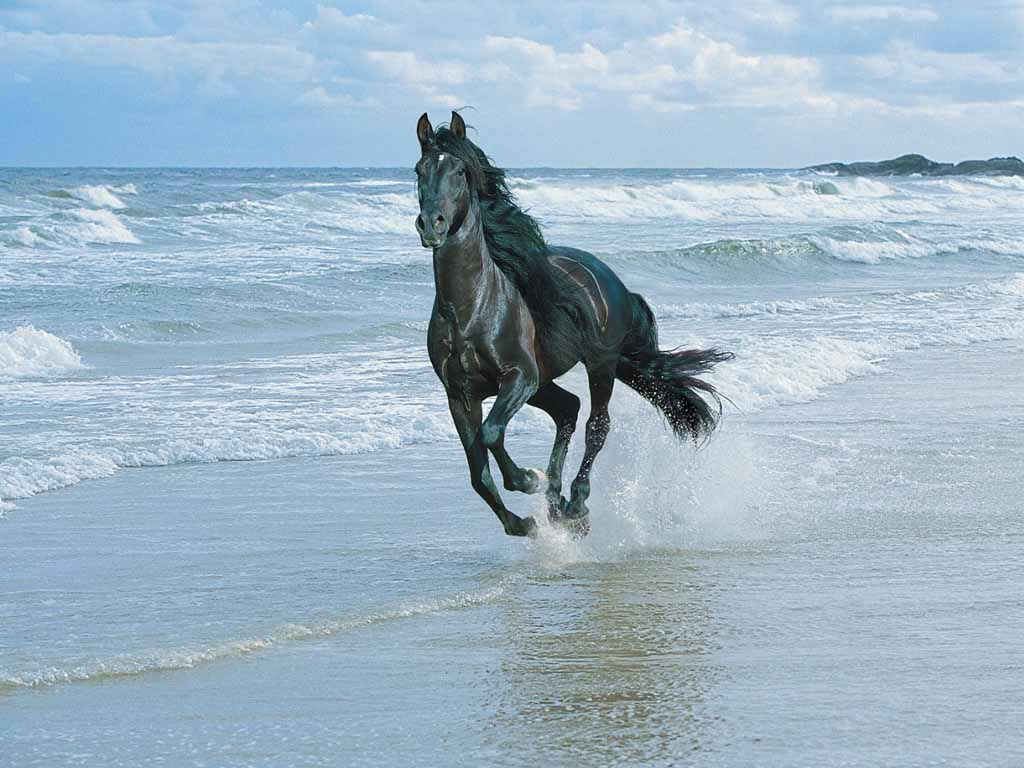photo of horse galloping on beach. ""