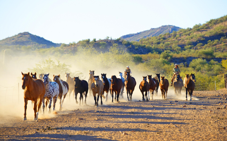 Horses caballeros