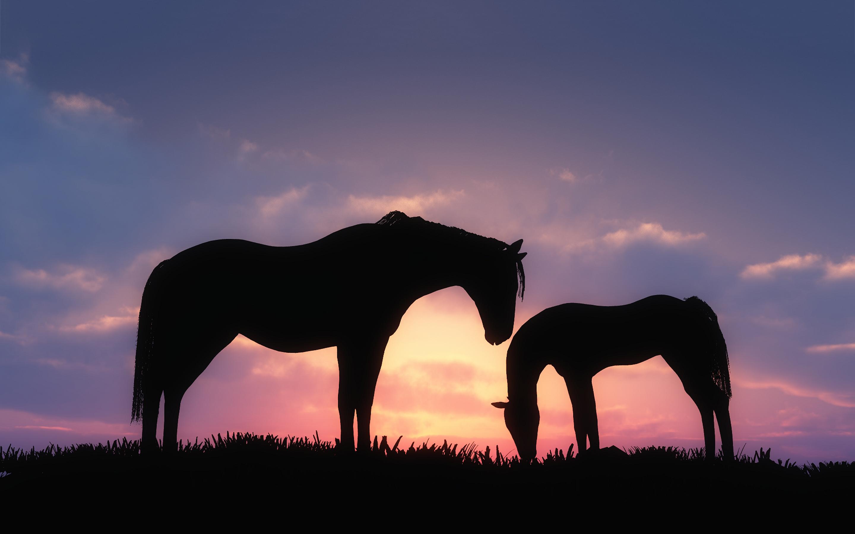Horses sunset silhouette