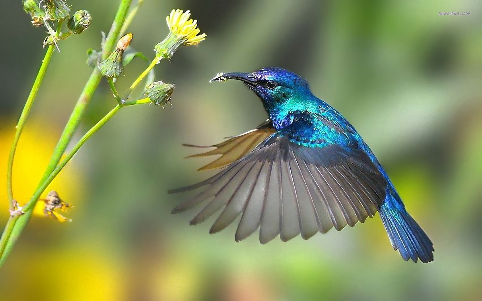 "The hummingbird replied, ""I heard that the sky might fall today, and so I am ready to help hold it up, should it fall."""
