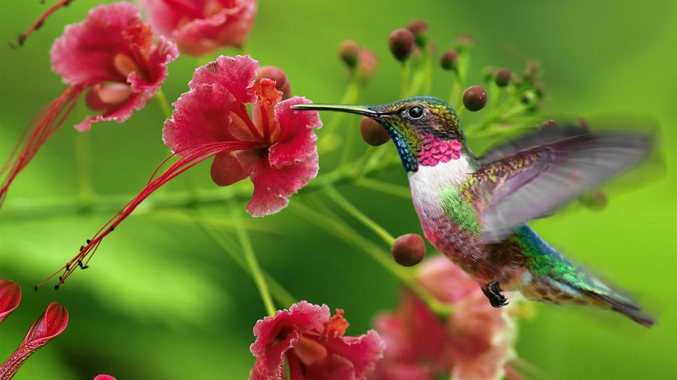 Hummingbird Flowers Garden