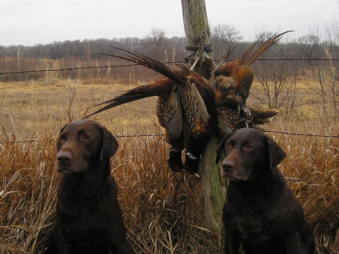 Hunting legislation and agencies[edit]