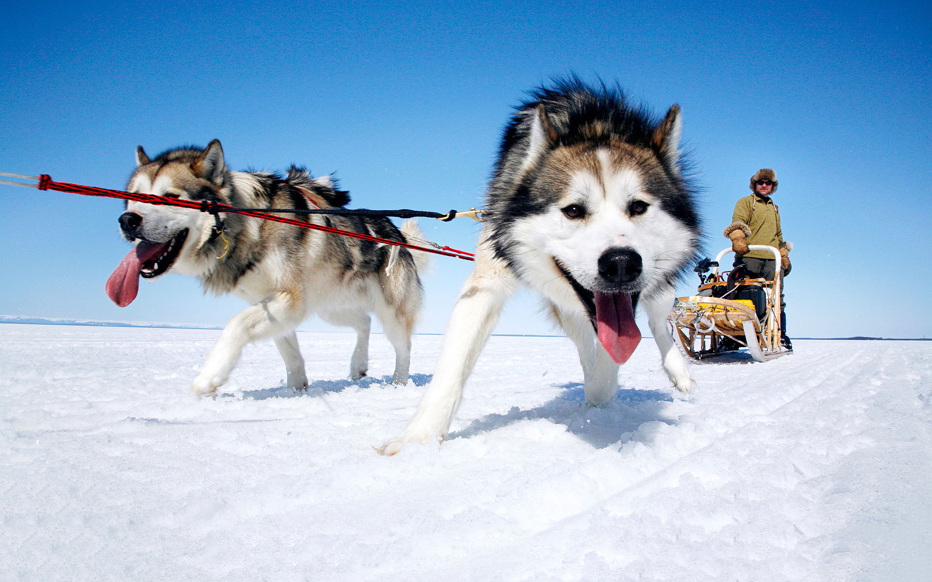 Name For An Alaskan Dog