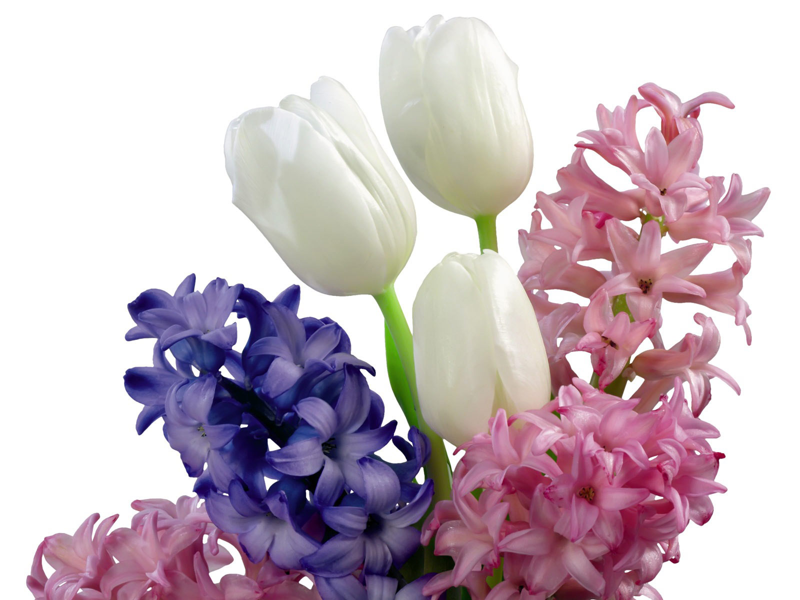 Desktop Wallpaper · Gallery · Nature Tulips and Hyacinth bouquet