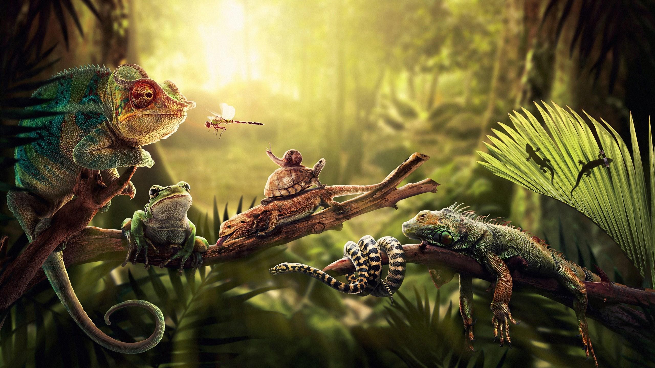 Iguana Lizards Turtle Dragonfly Snake Snail Frog