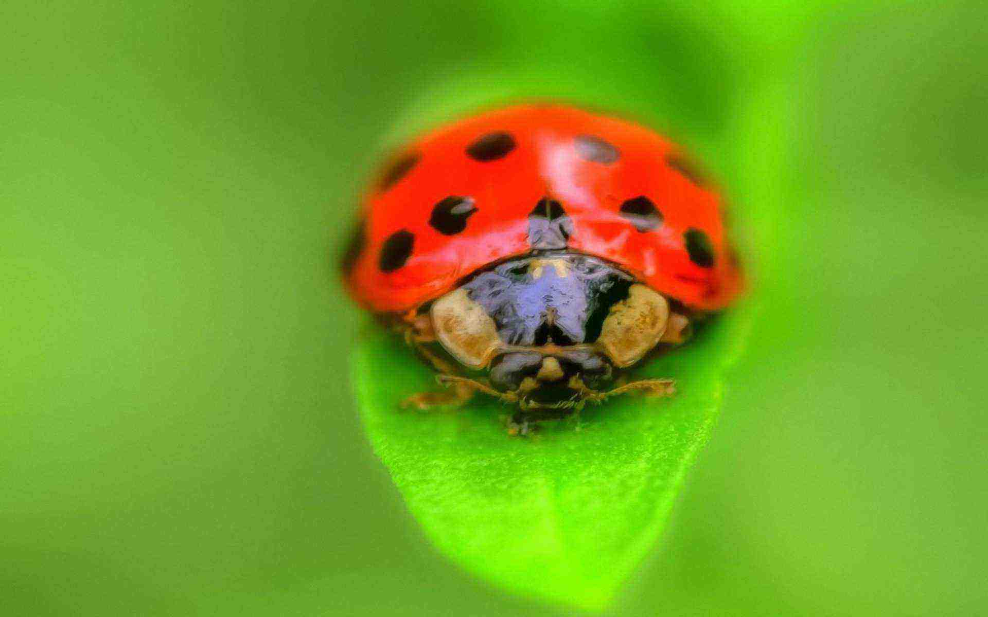 DOWNLOAD: ladybug grass insect free picture 2560 x 1600