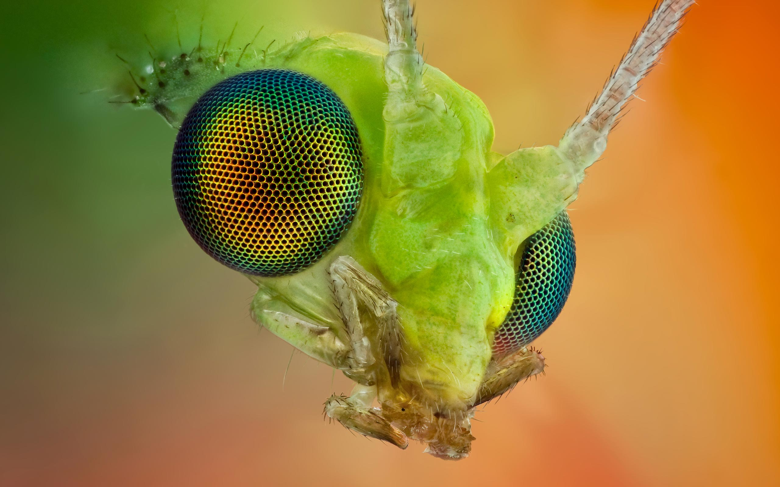 Insect Macro Wallpaper High Resolution Jpeg 8924