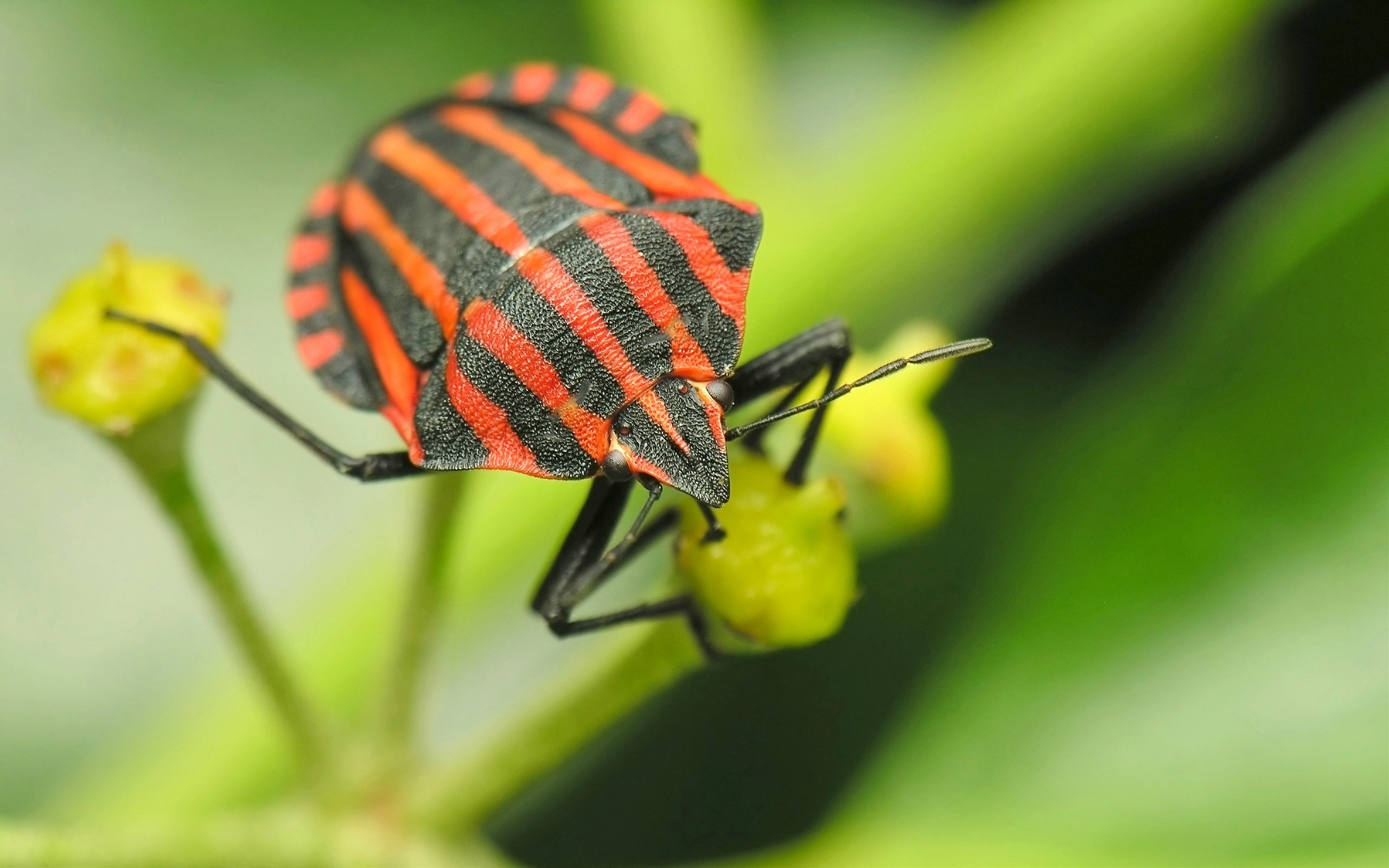 Insect Wallpaper