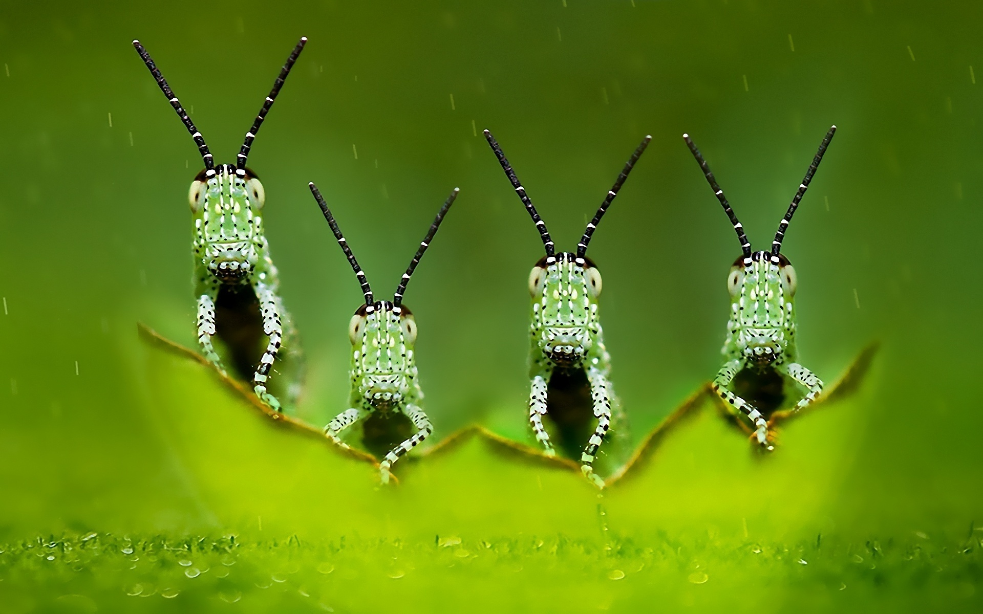Animal - Insect Wallpaper