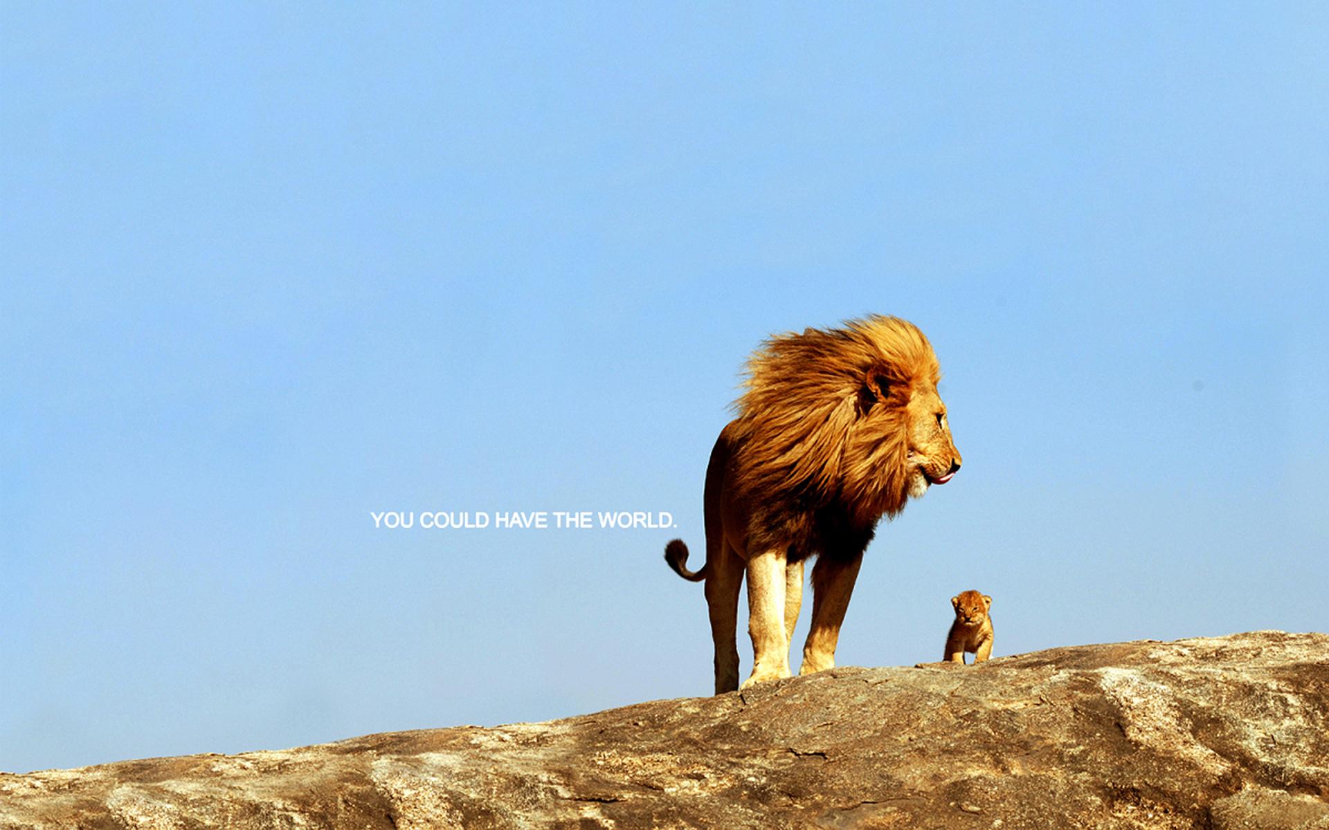 mountains nature animals rock cubs inspirational kittens lions