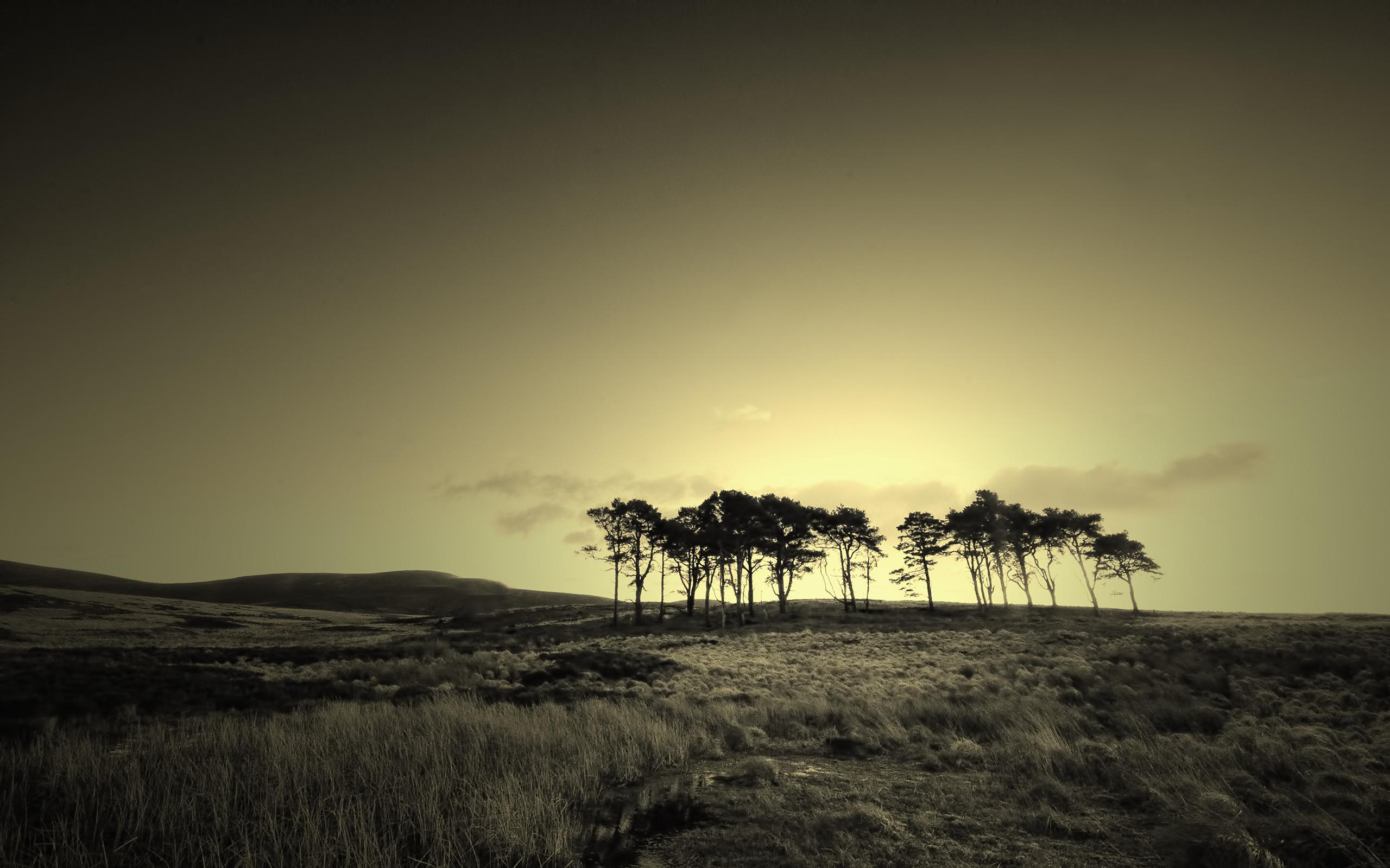 Isolated landscape