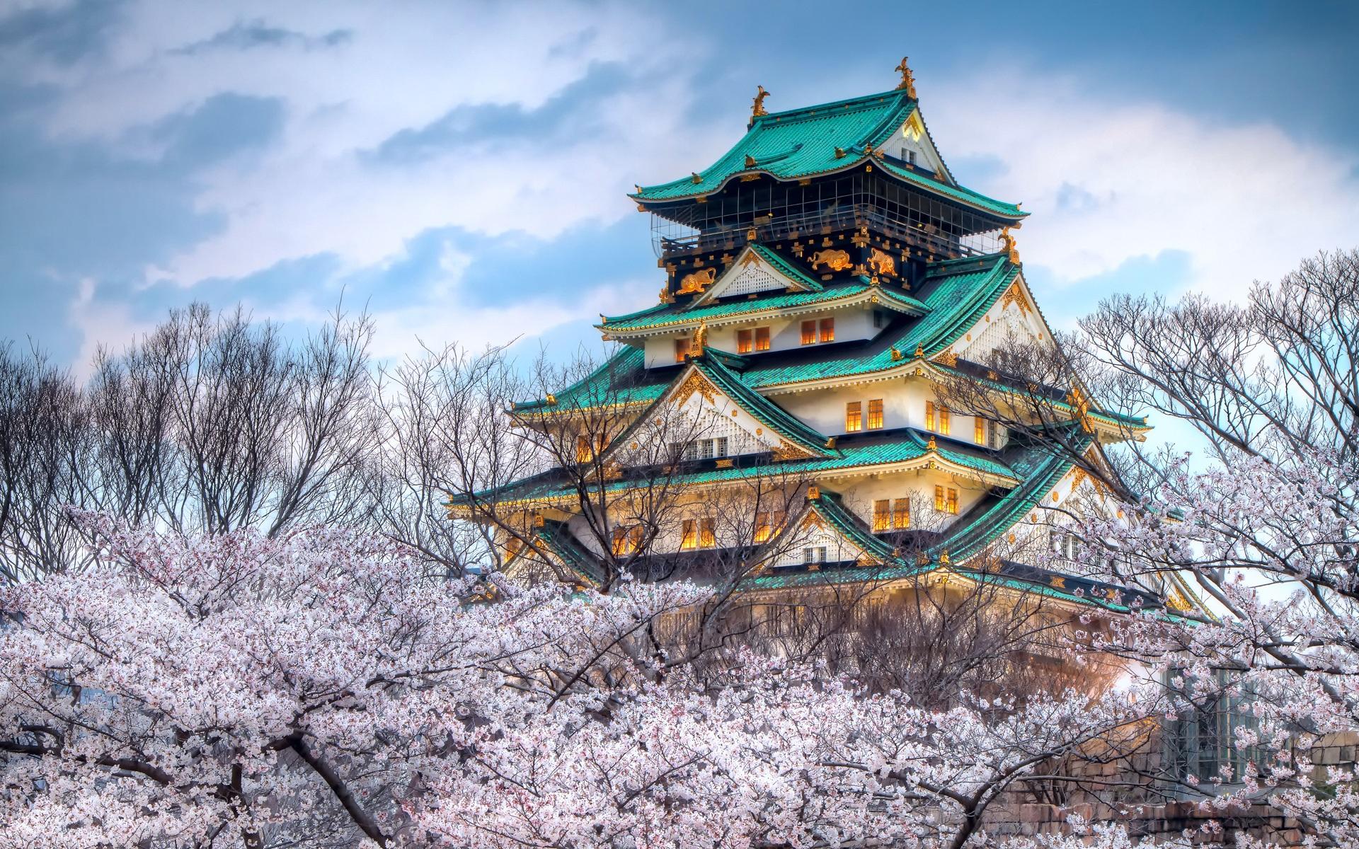Japan sakura blossom temple