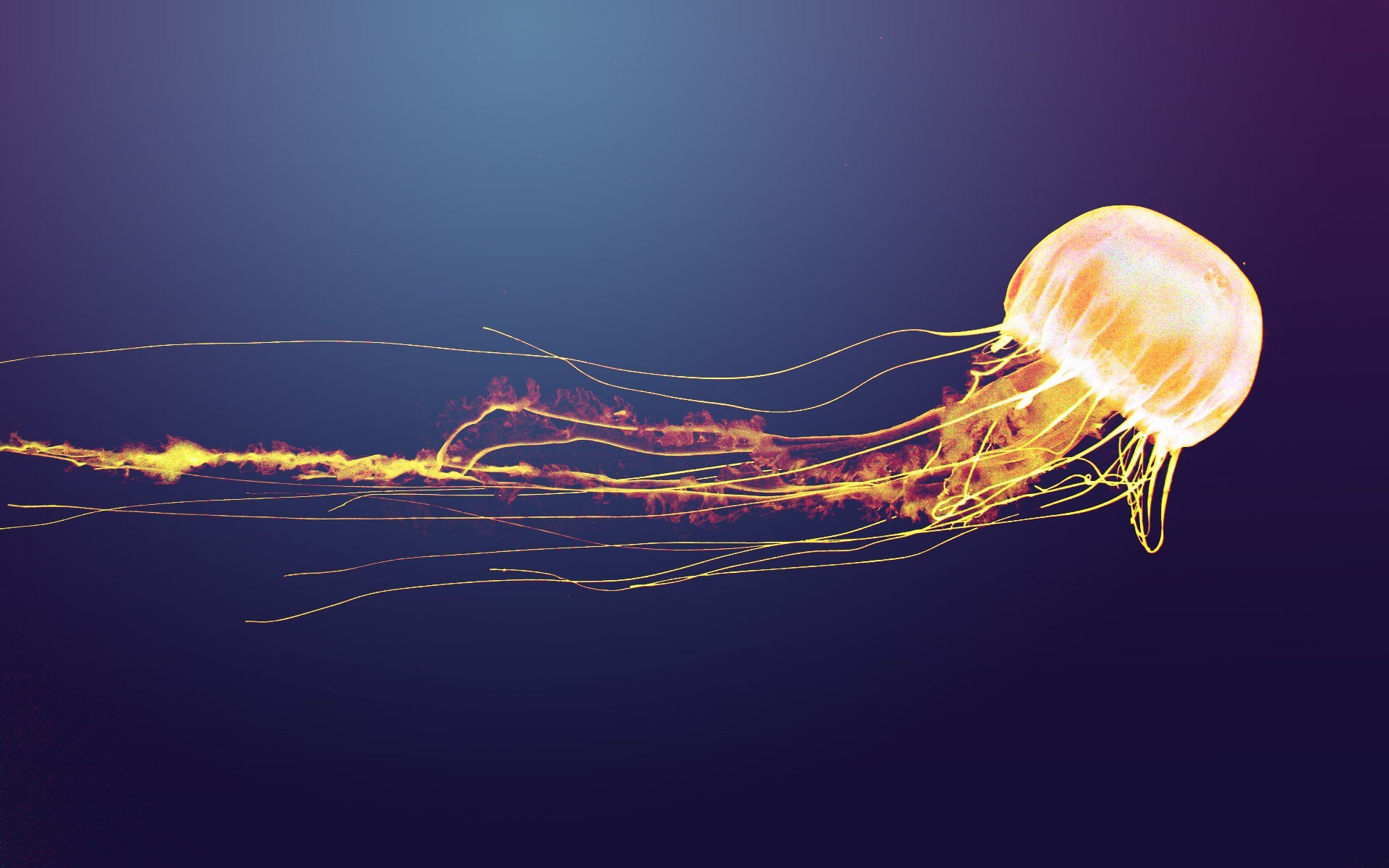 HD Wallpaper | Background ID:464911. 1920x1200 Animal Jellyfish