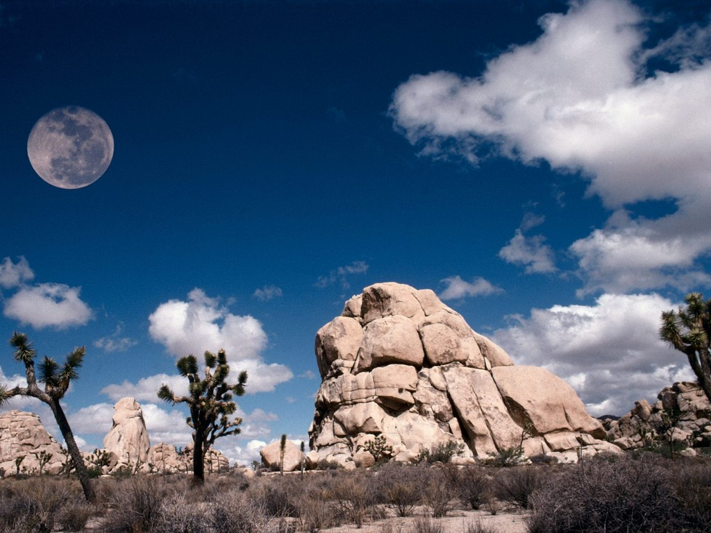 joshua tree wallpaper | 1024x768 | #5339