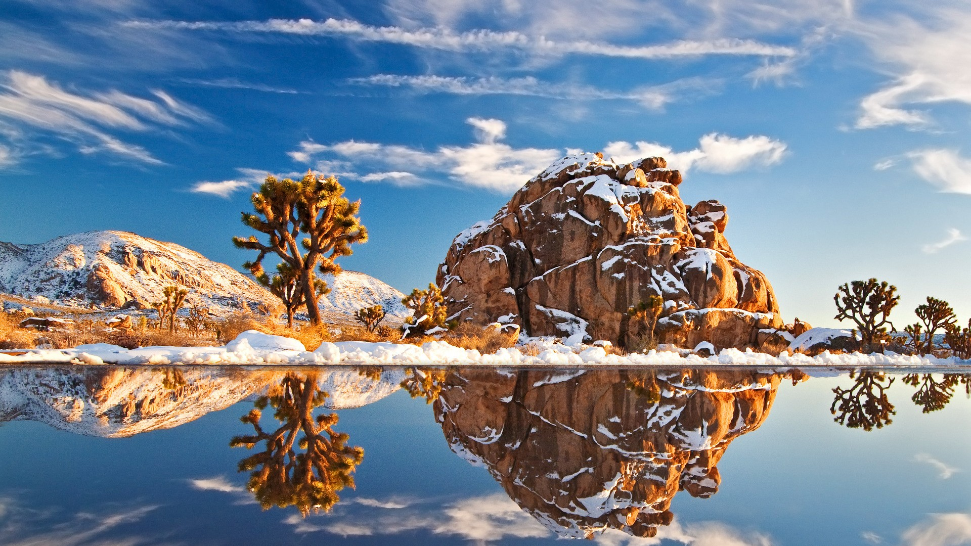 Joshua Tree: 28 Stunning Photos From America's Most Buzzed About National Park