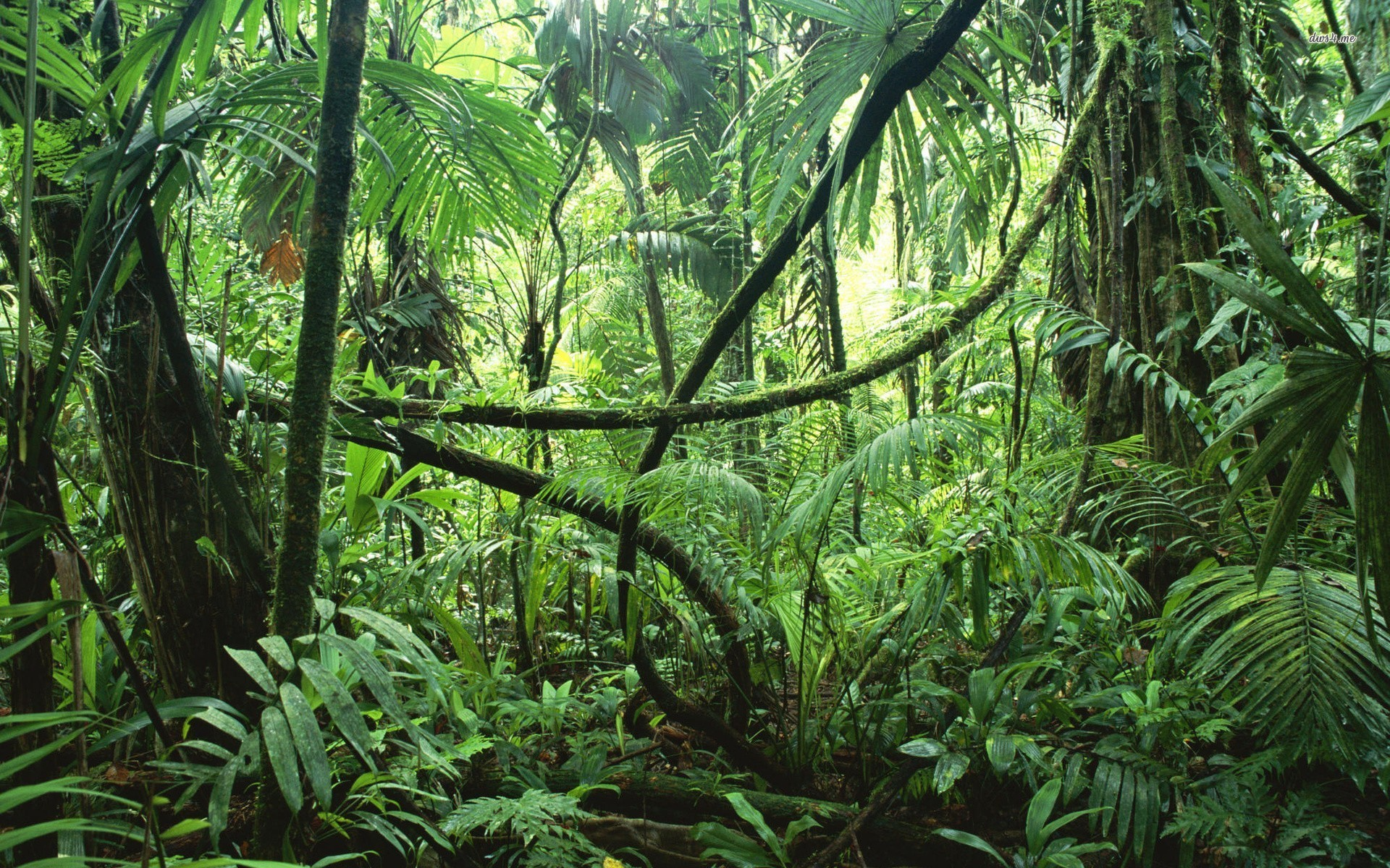 Jungle rainforest