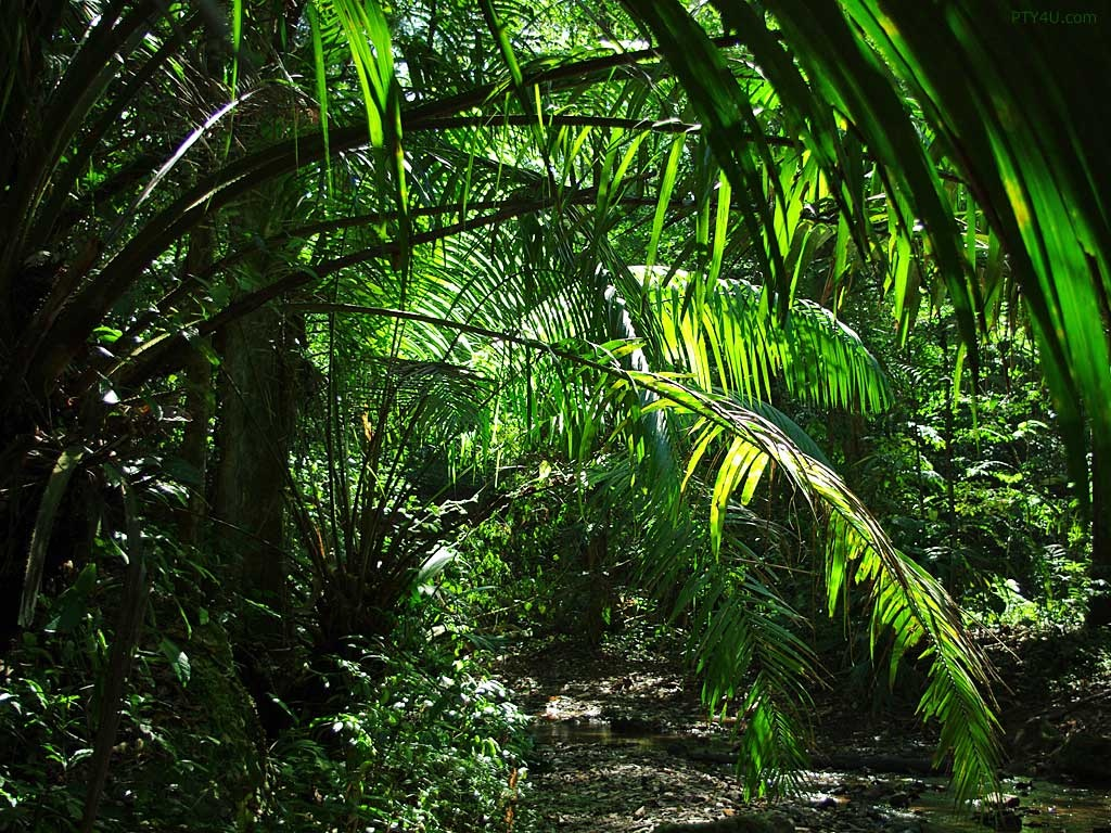 Jungle Wallpapers HD A23