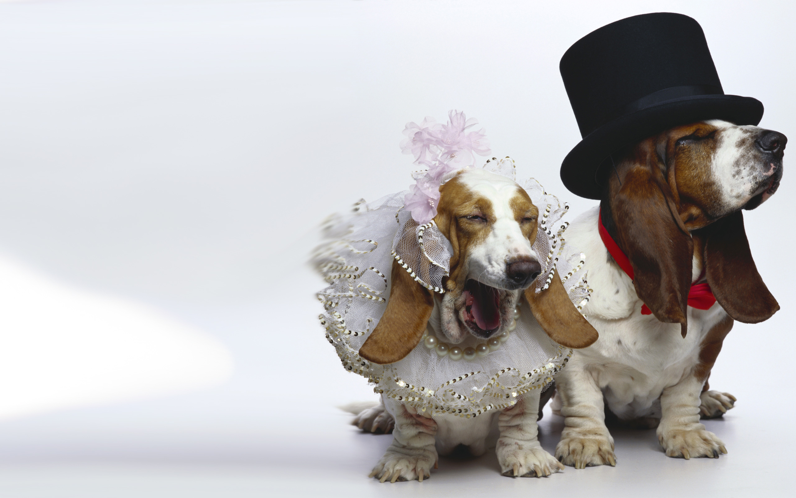 DOgs Just Married